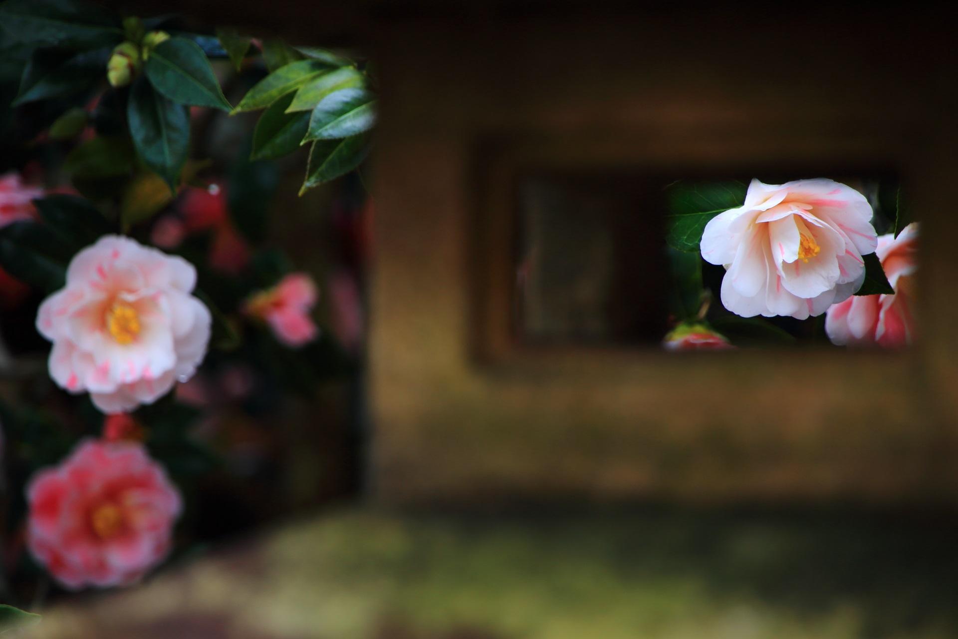 燈籠からのぞく華やかな椿の花