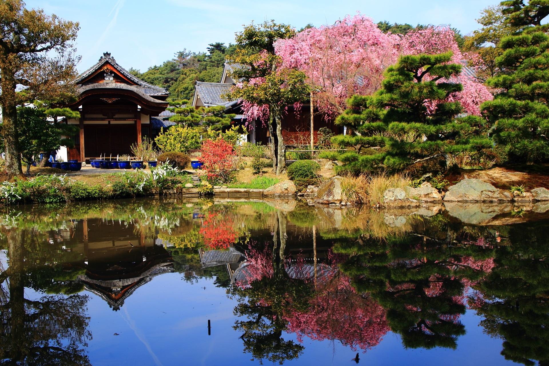 しだれ桜の美しい水鏡