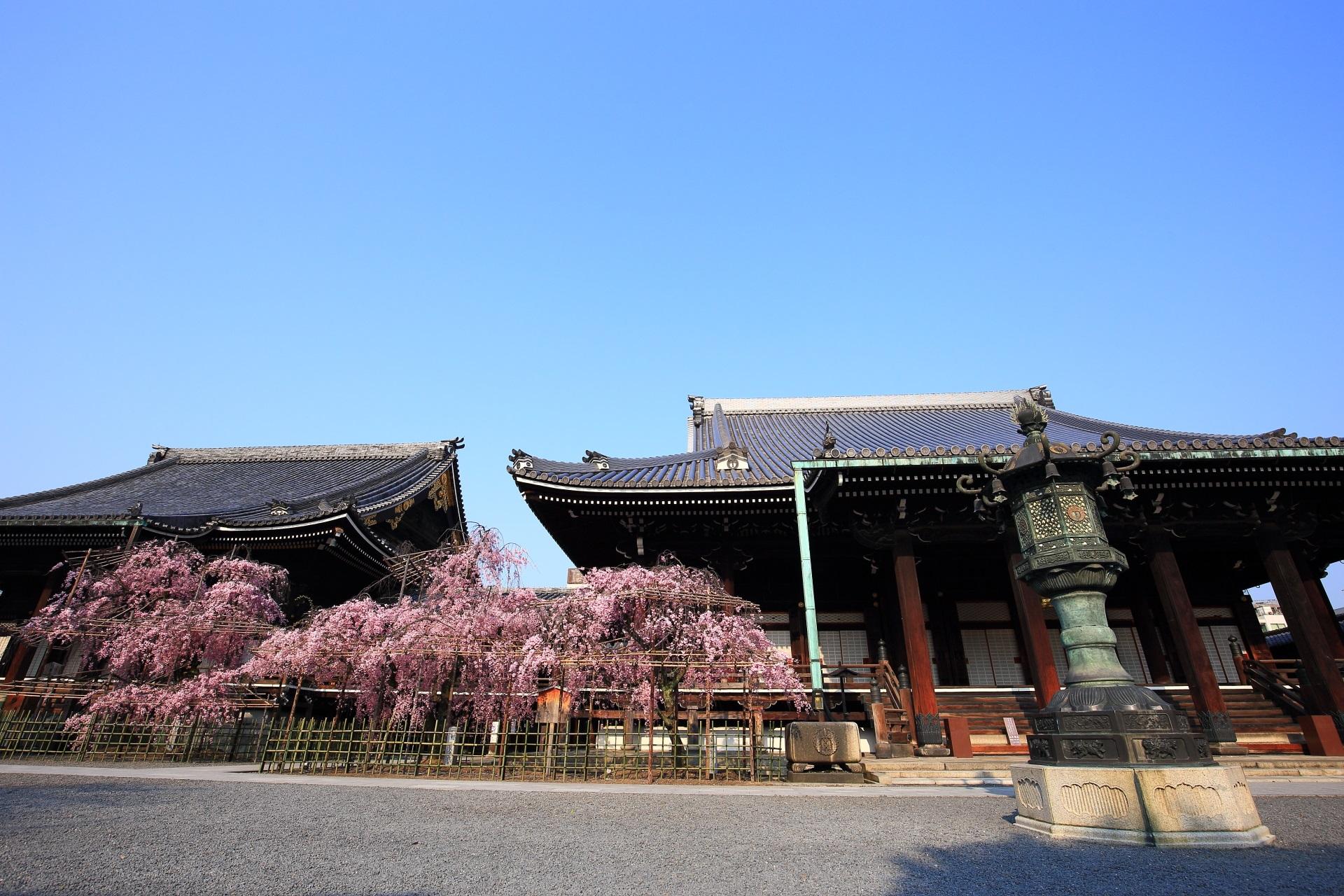 大師堂と阿弥陀堂としだれ桜