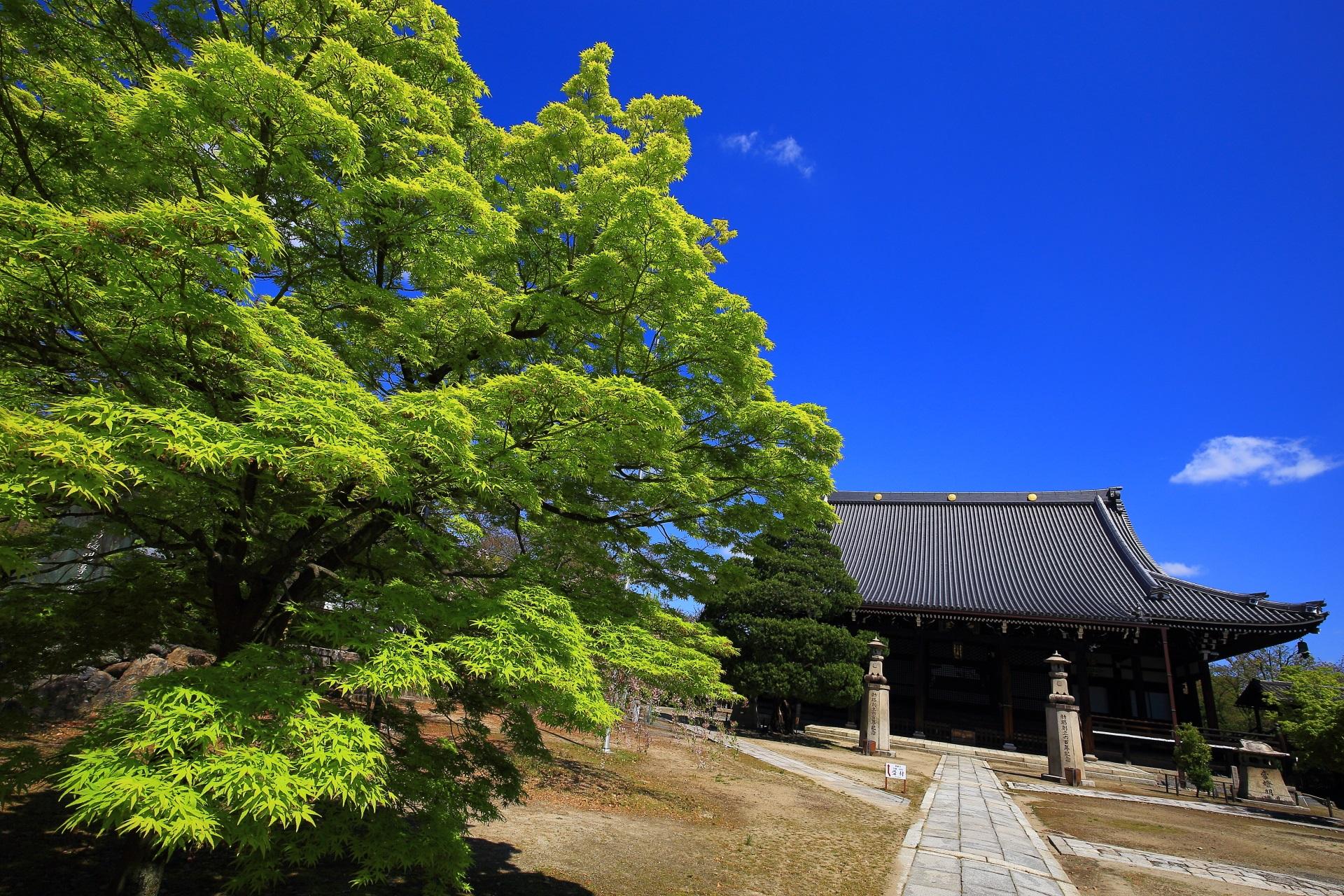 妙顕寺 新緑 高画質 写真