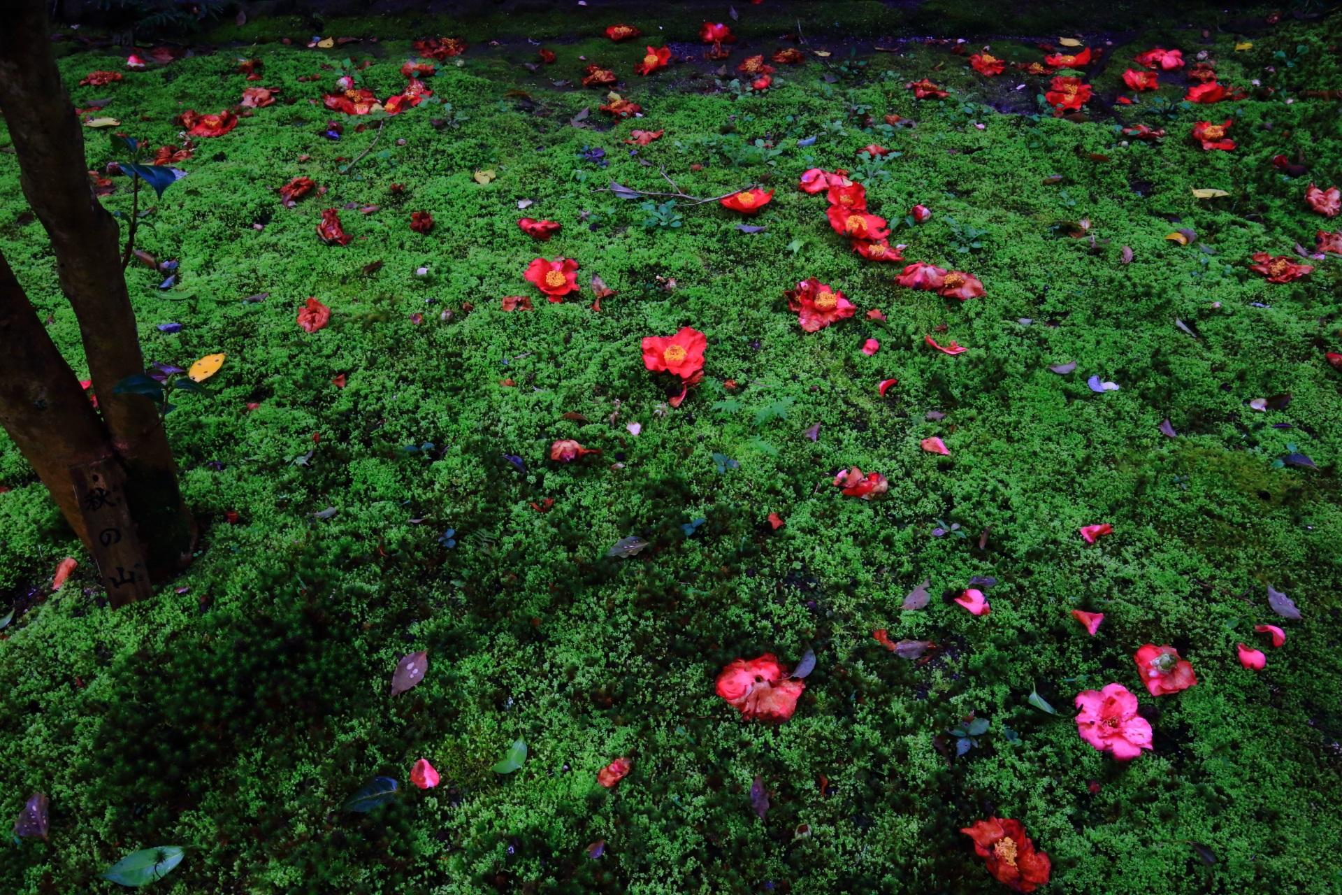 深い苔に鮮やかに散る椿