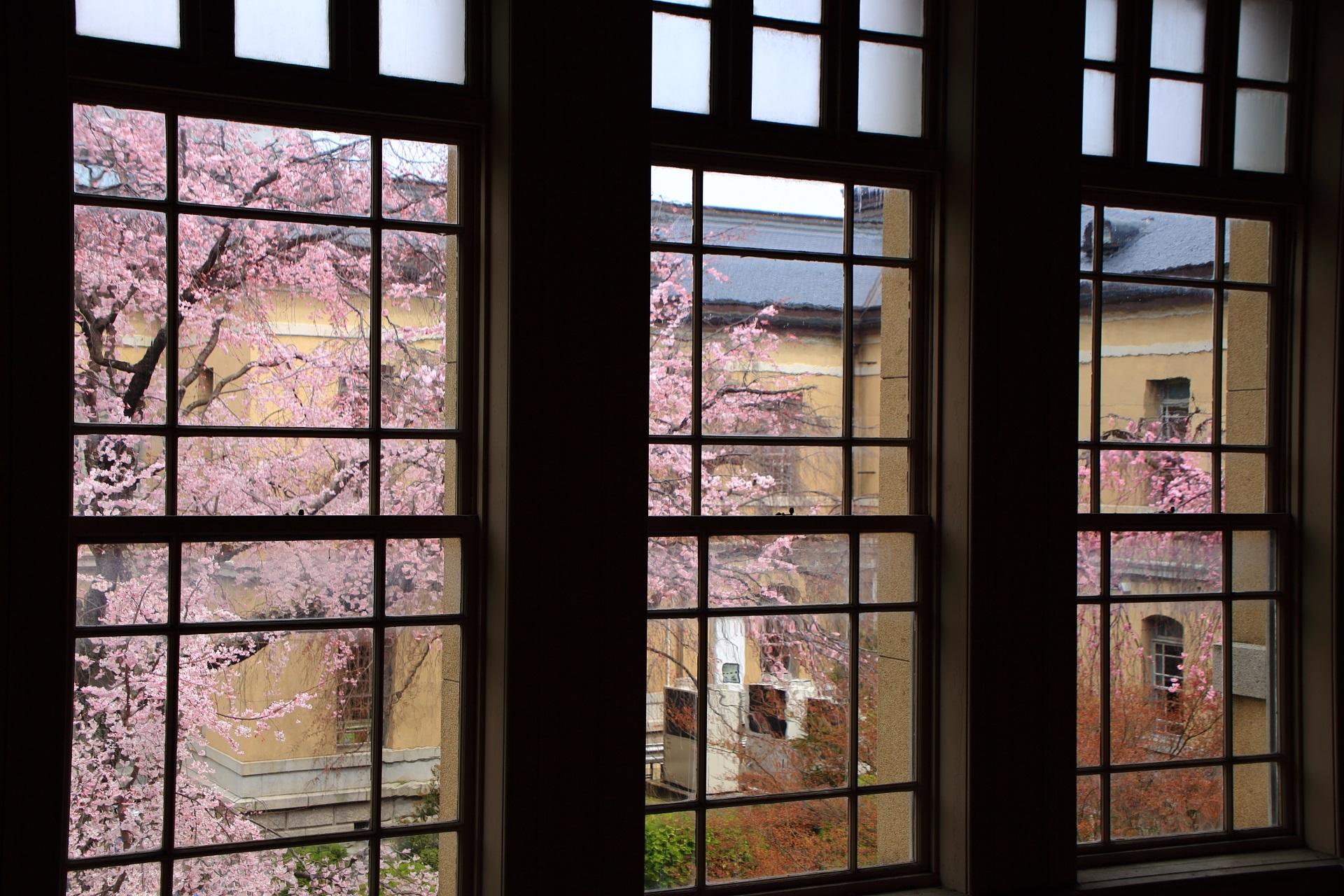 他にはあまりない近代建築と桜の独特の風景