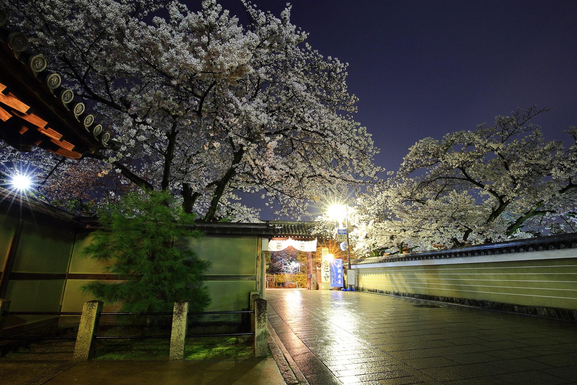 昼間は賑やかも夜は静かな花見小路通りの桜