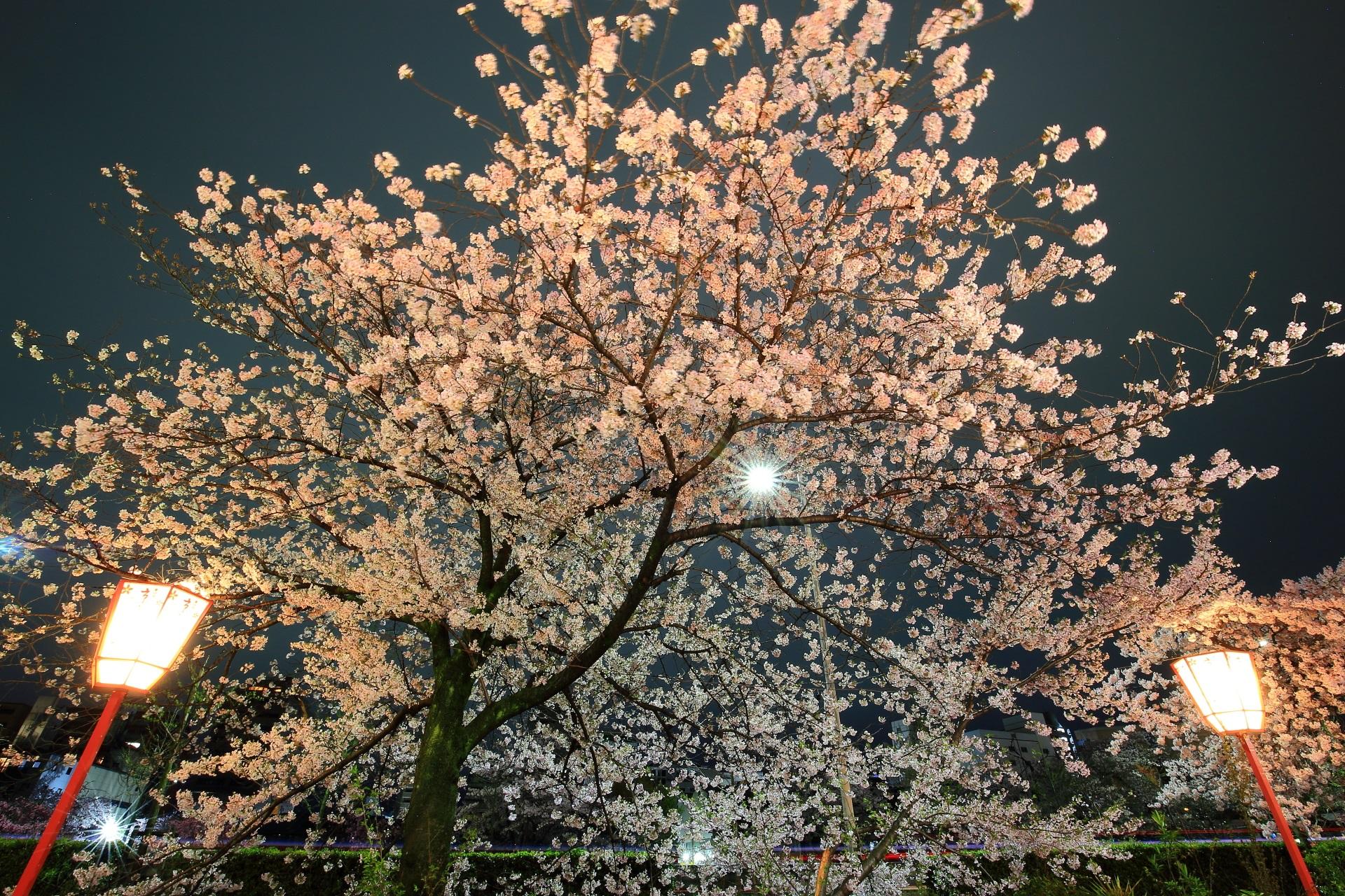 闇夜に豪華に広がる見事な夜桜