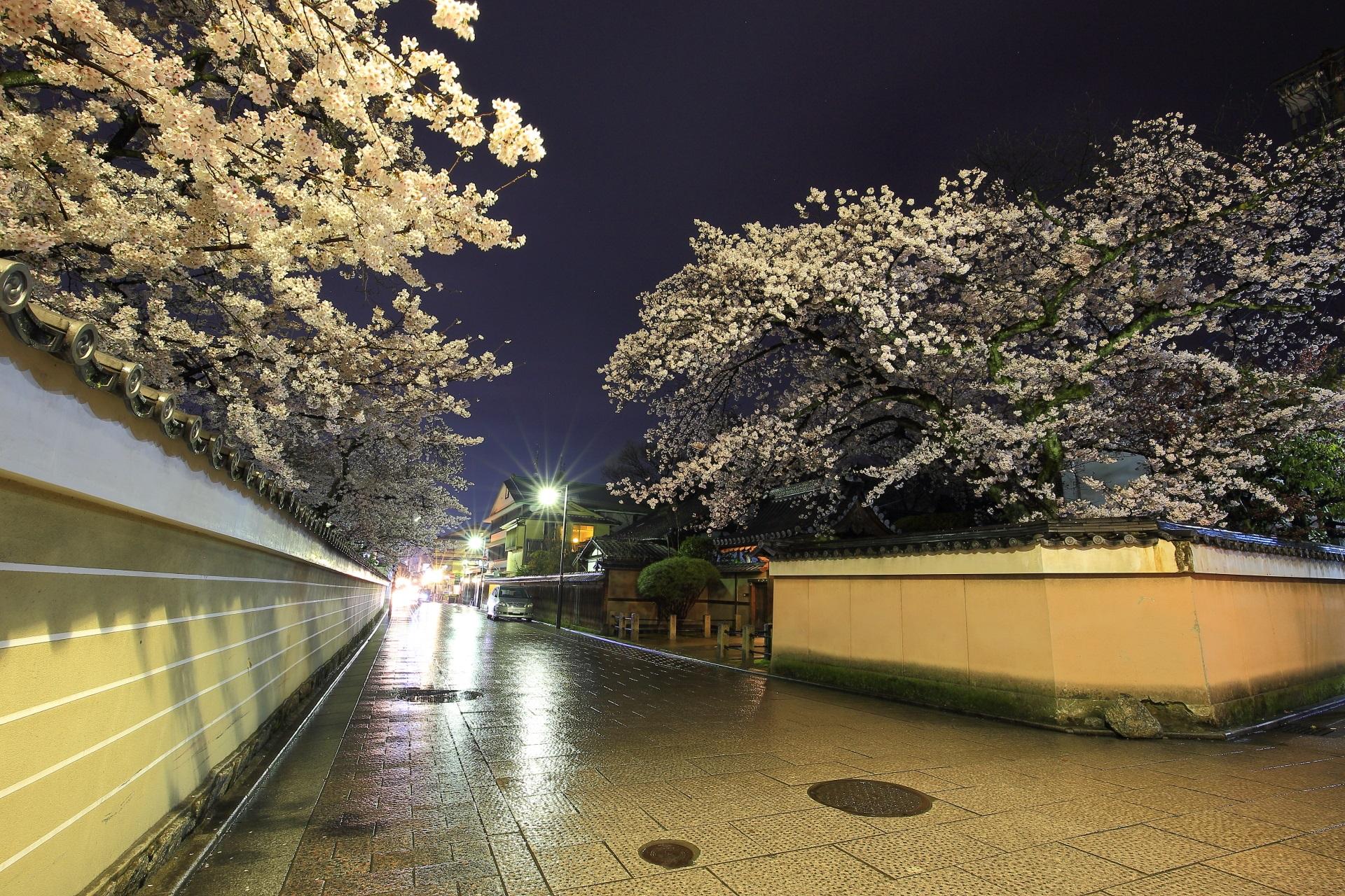 大中院と建仁寺の素晴らしい夜桜と情景