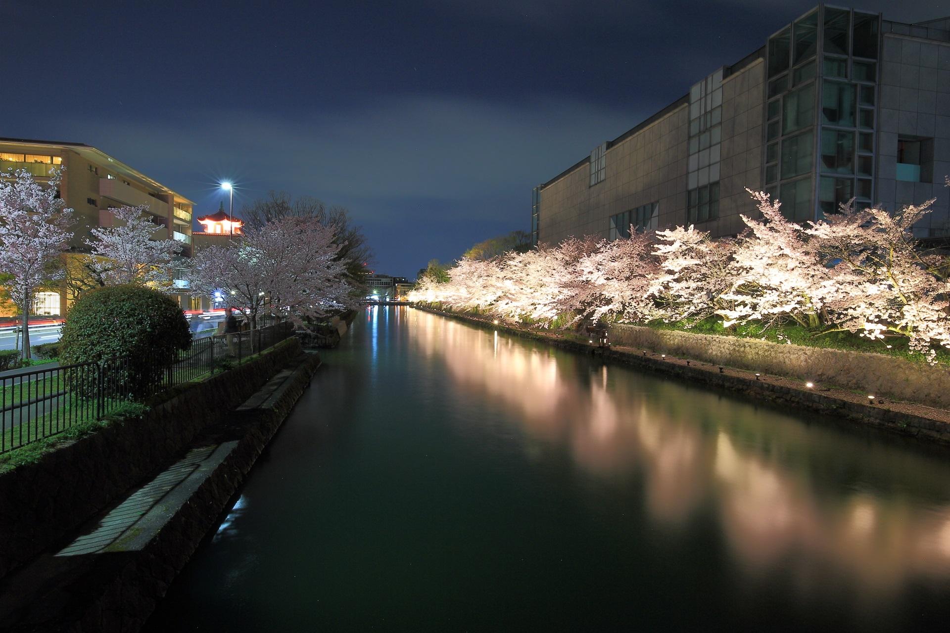闇夜に漂うピンクの淡い光