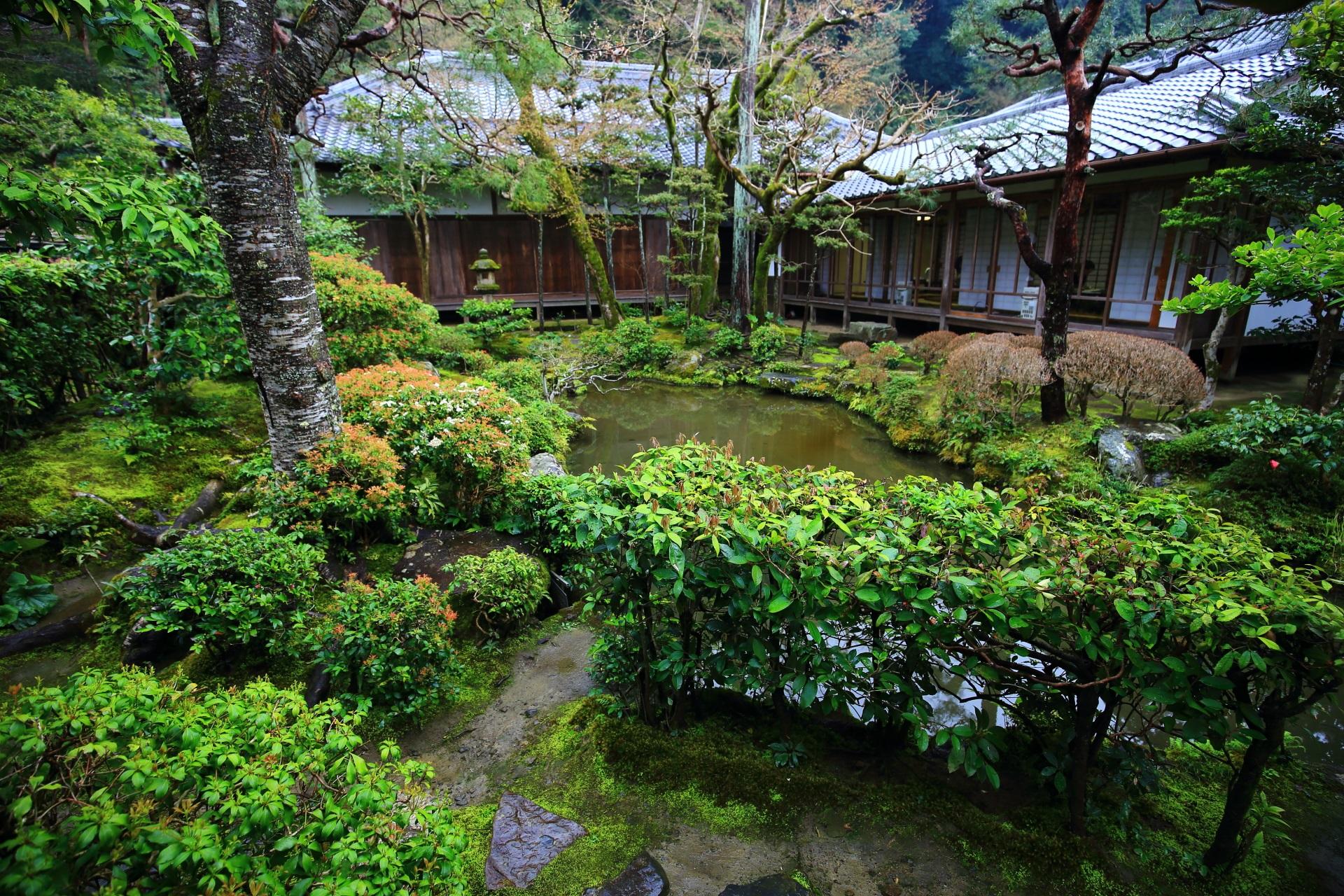 多種多様な緑が植えられている池泉式庭園の法然院の方丈庭園