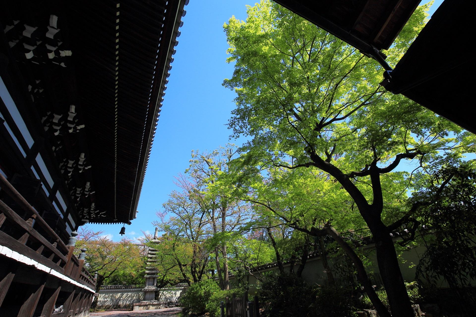 高画質 写真 妙顕寺 新緑