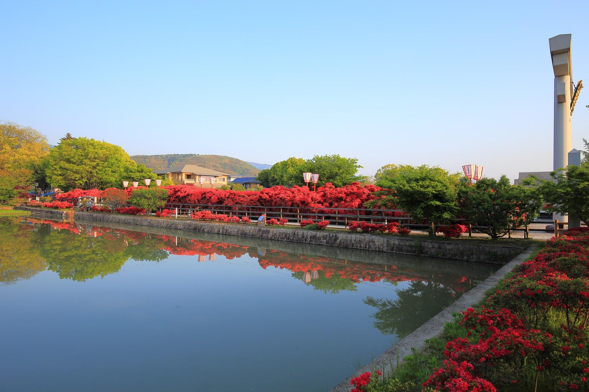 長岡天満宮の八条が池の南側のキリシマツツジと大鳥居