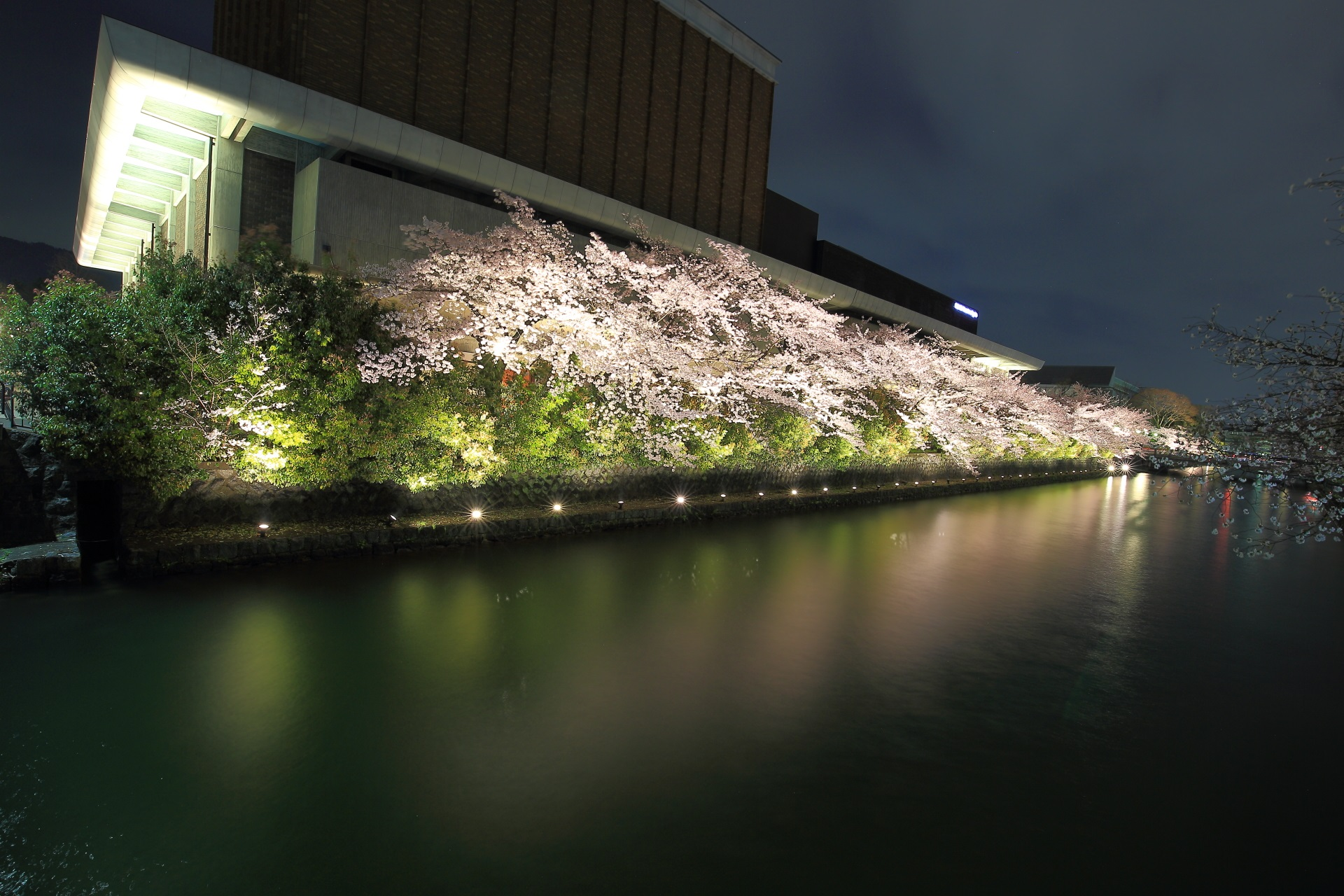 疏水が南北に流れるロームシアターの前辺りの桜