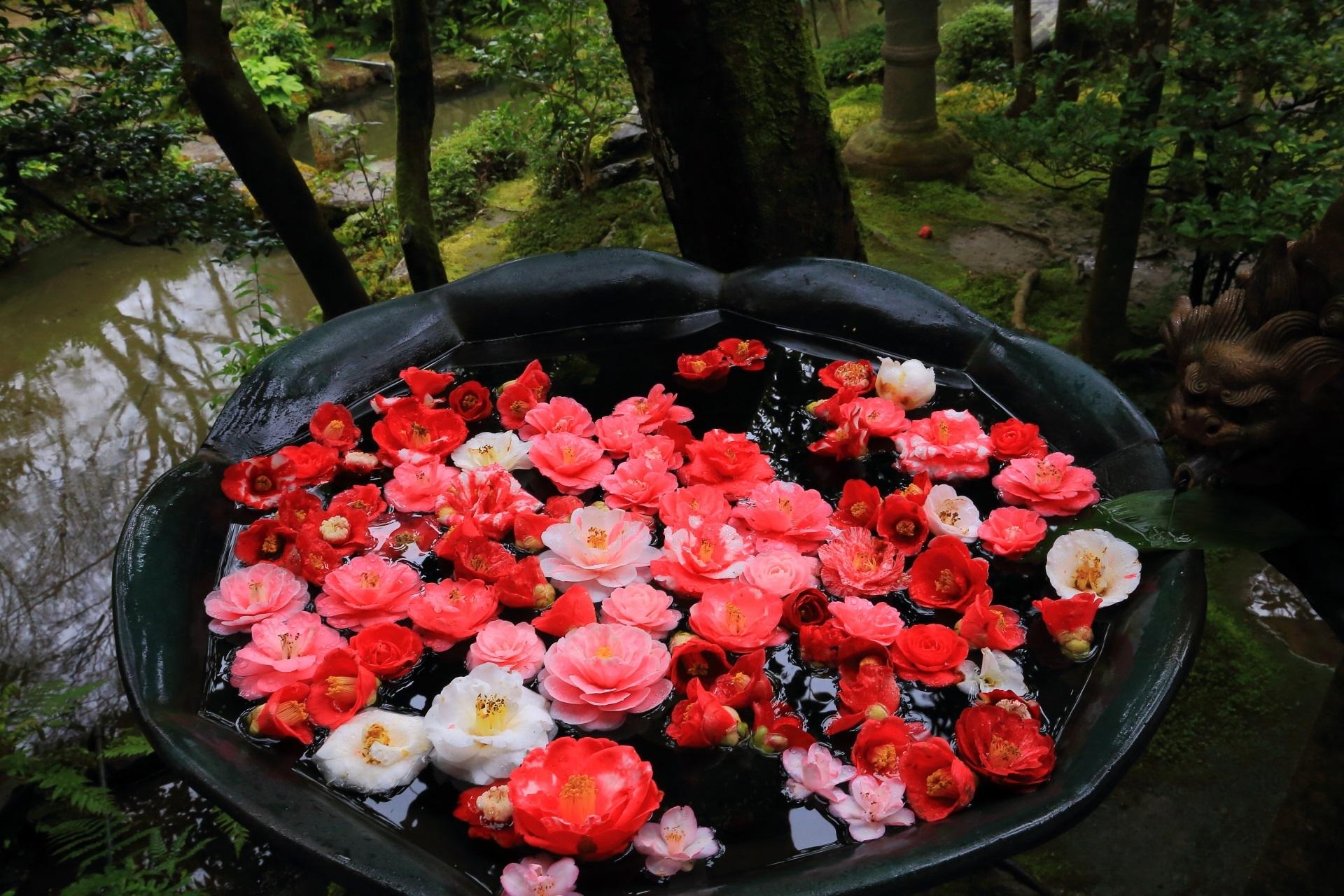 法然院 椿 鮮やかな彩りと風情ある庭園