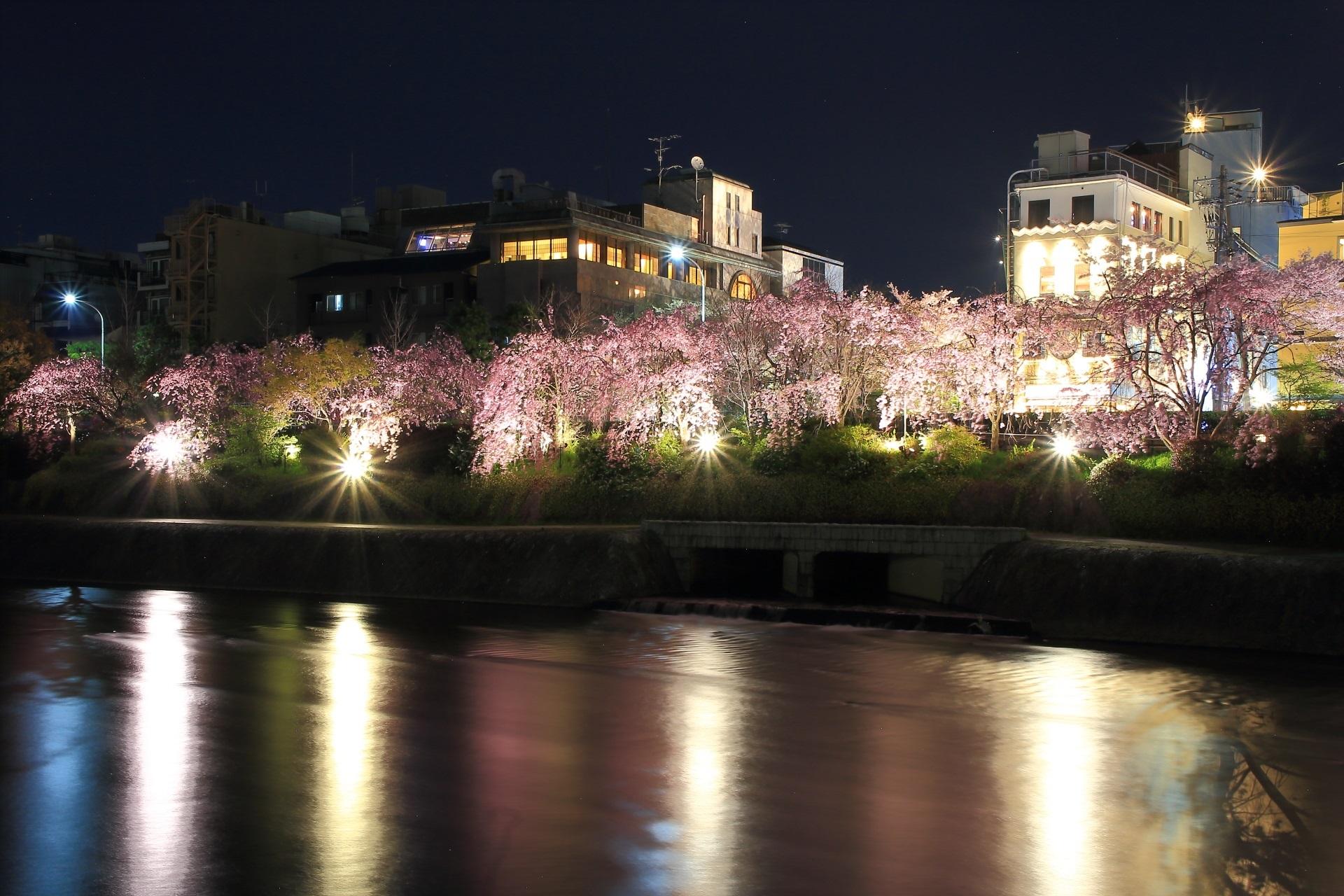 鴨川 夜桜 きらめく水辺の桜