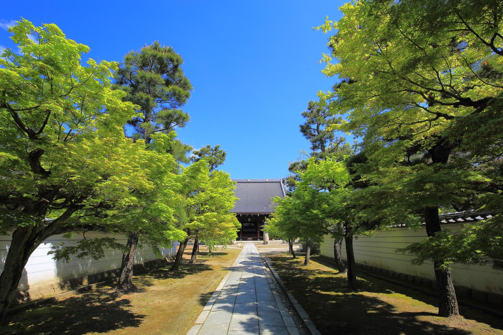 妙顕寺 新緑 雄大な伽藍とさわやかな緑