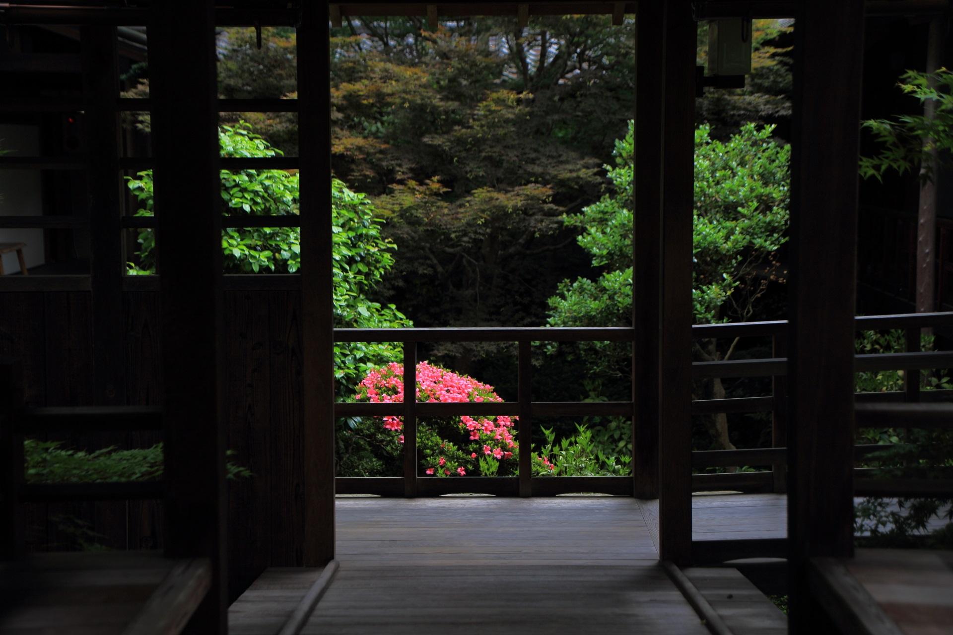 風情と華やかさを併せ持っている安楽寺の回廊から眺めるサツキ