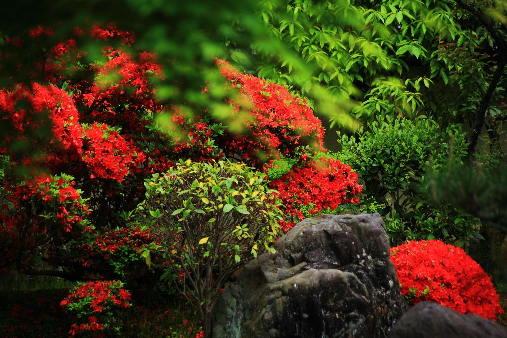 正伝永源院の緑と赤の綺麗な春色のコントラスト