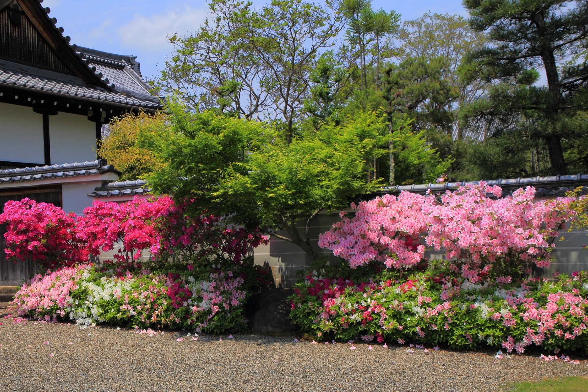 ピンクと紫と緑の鮮やかな春の色合い