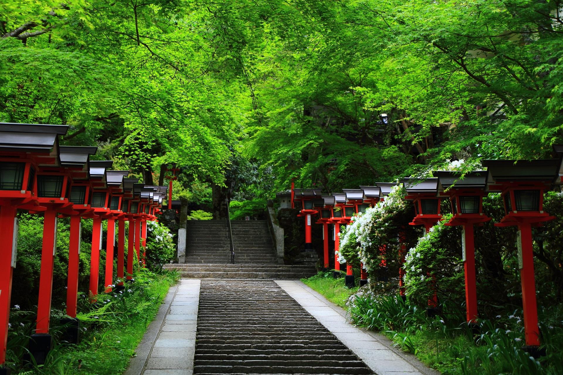 深い緑におおわれた鞍馬寺の参道