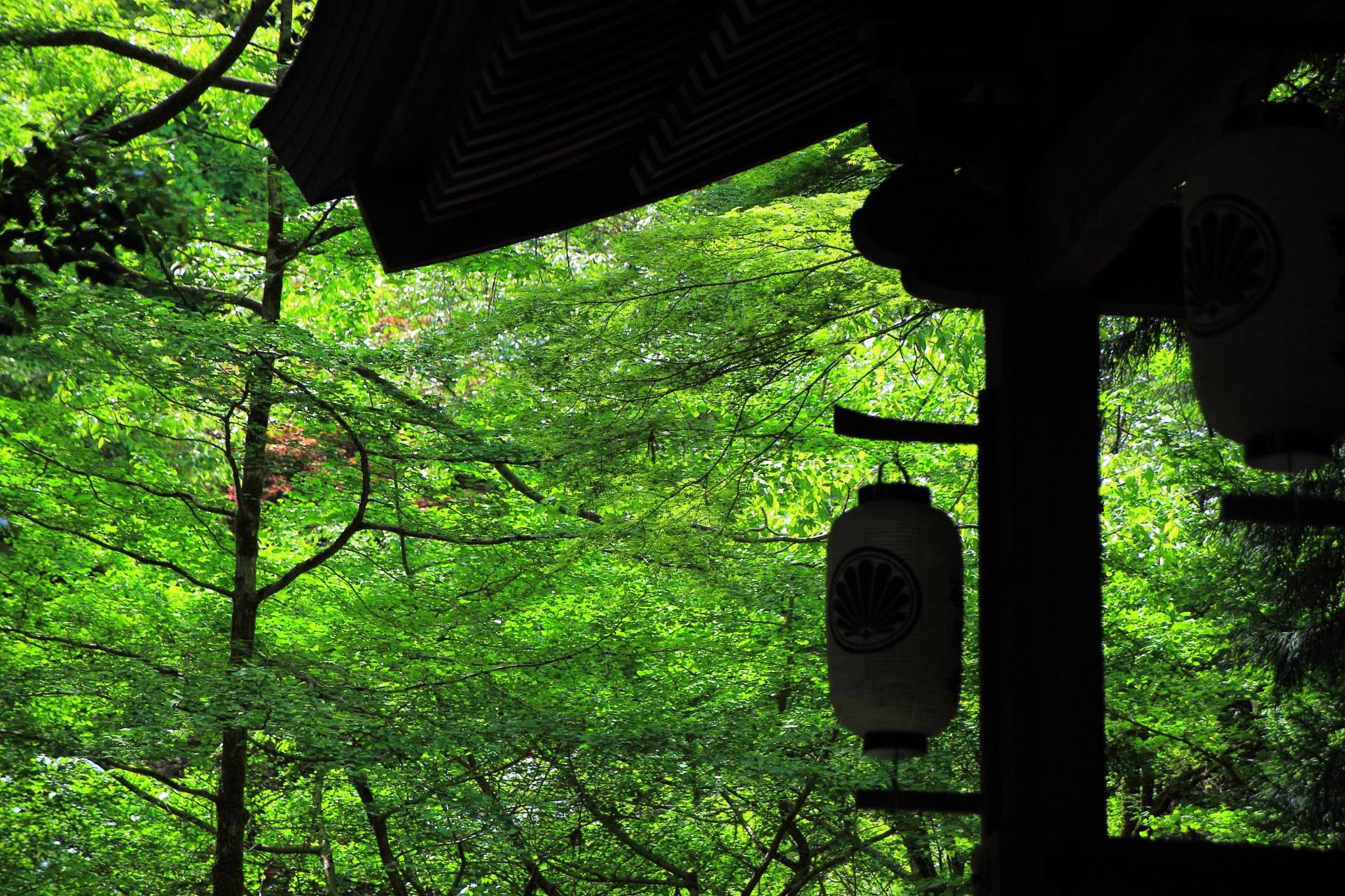 鞍馬寺の中門と鮮やかな新緑