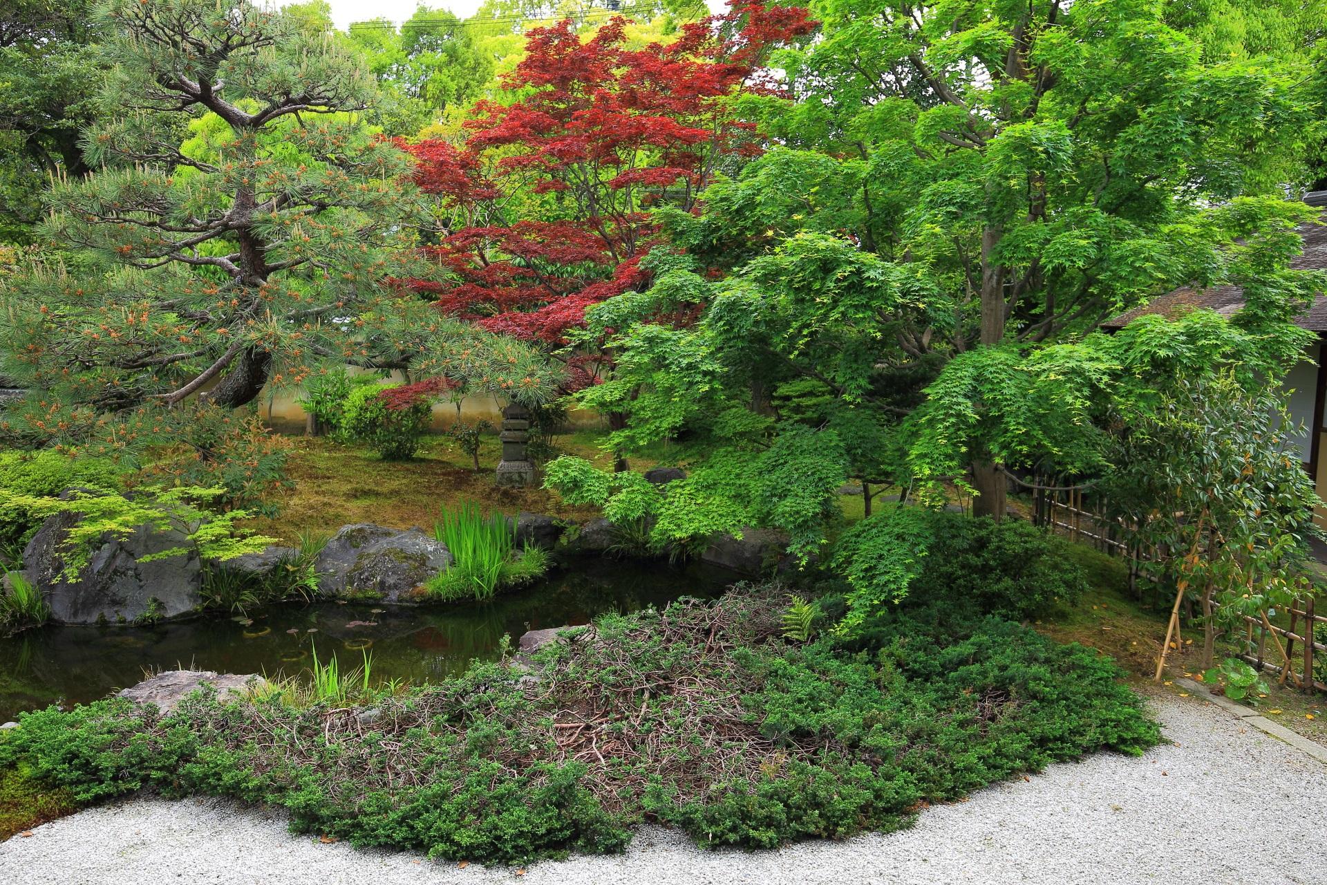 緑の綺麗な正伝永源院の方丈南側の池泉式庭園
