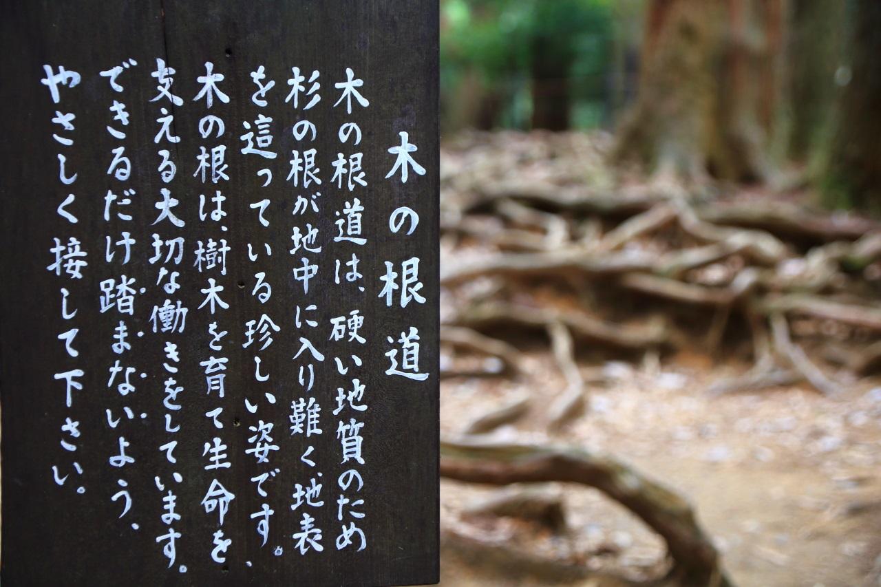 鞍馬山の「木の根道」説明