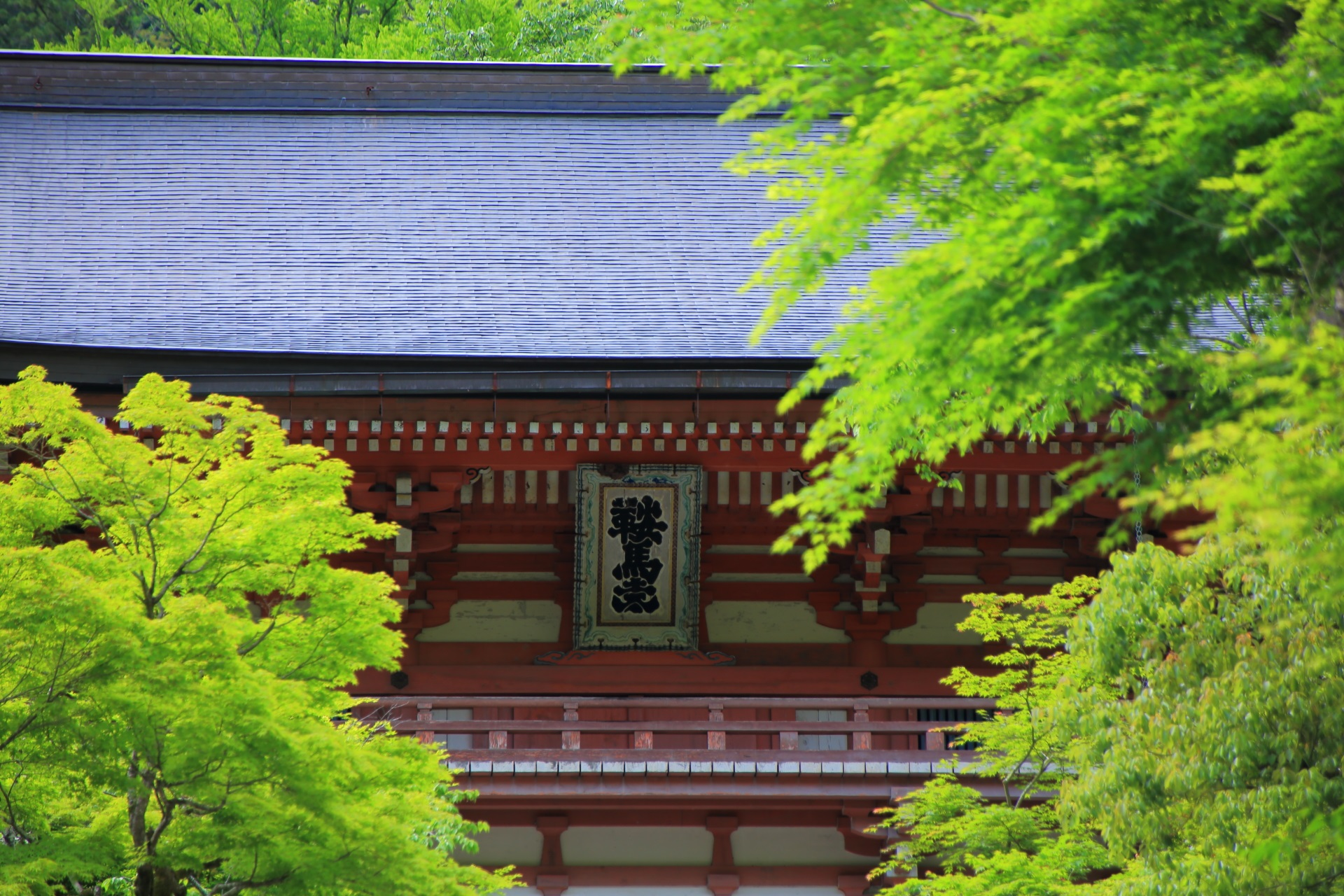 鞍馬寺の新緑につつまれた仁王門