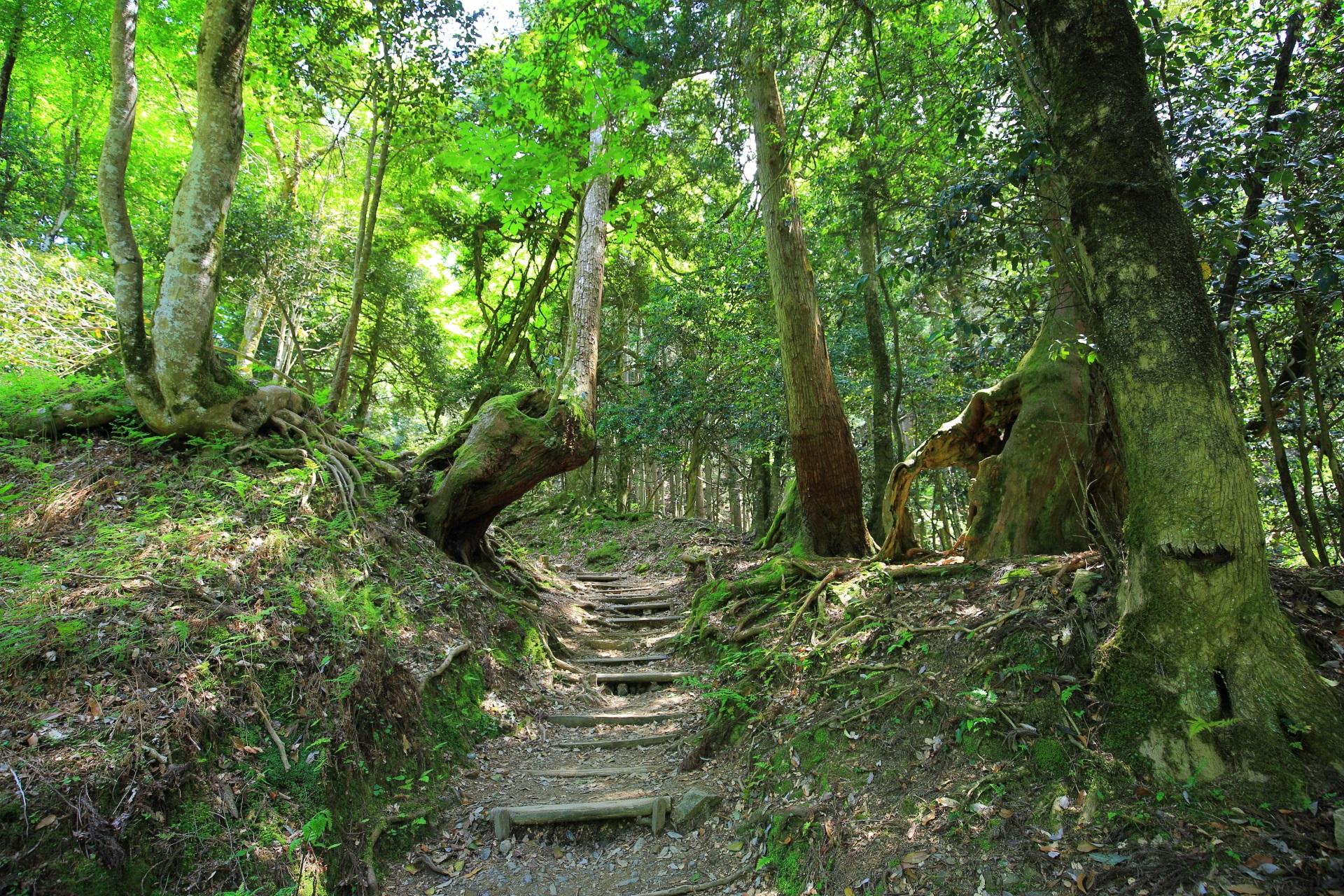自然の溢れる鞍馬山