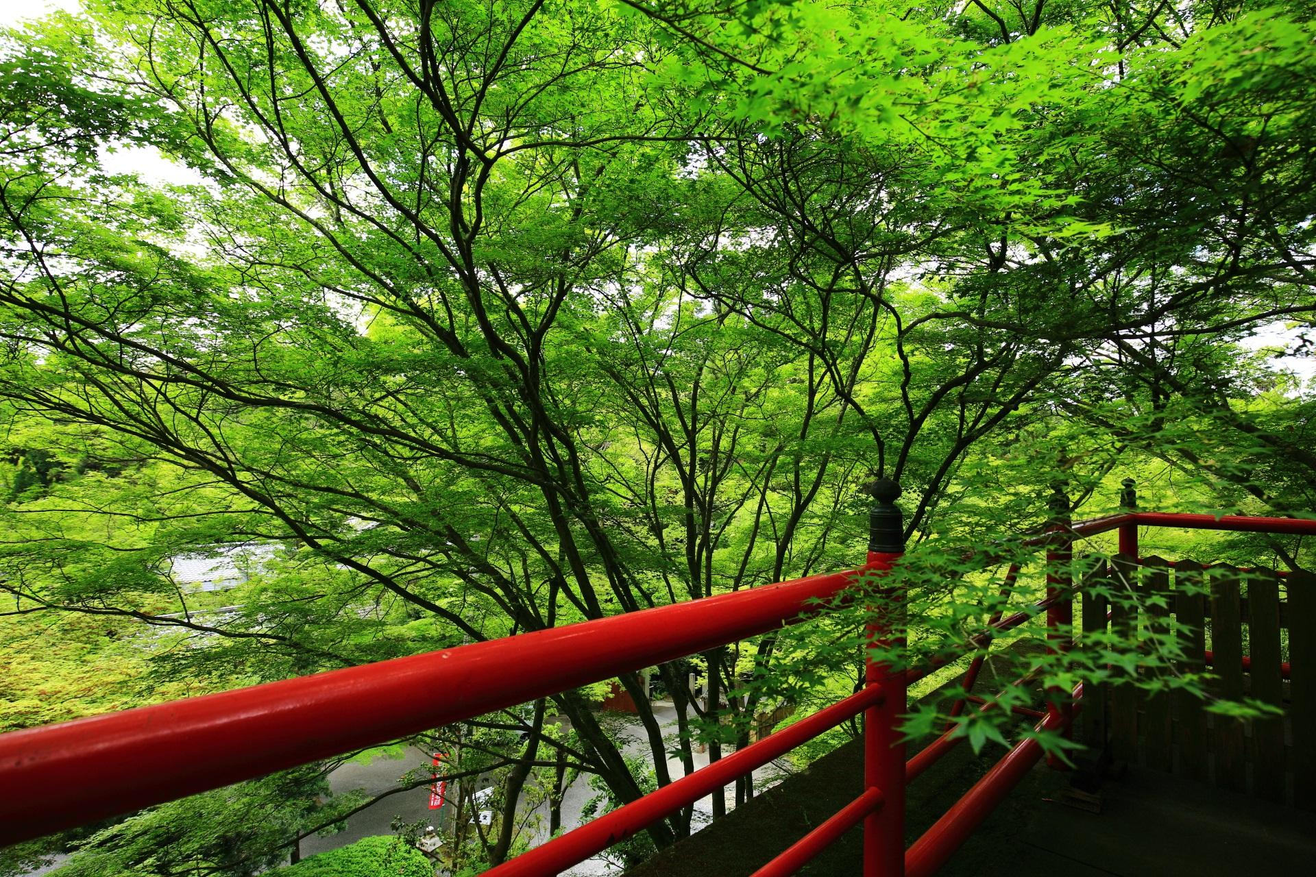 写真 今熊野観音寺 新緑 高画質