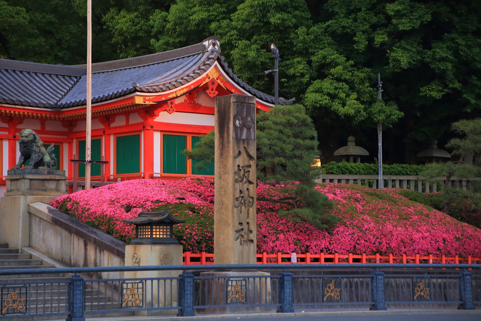 ピンクのサツキの花に彩られる緑の刈り込み