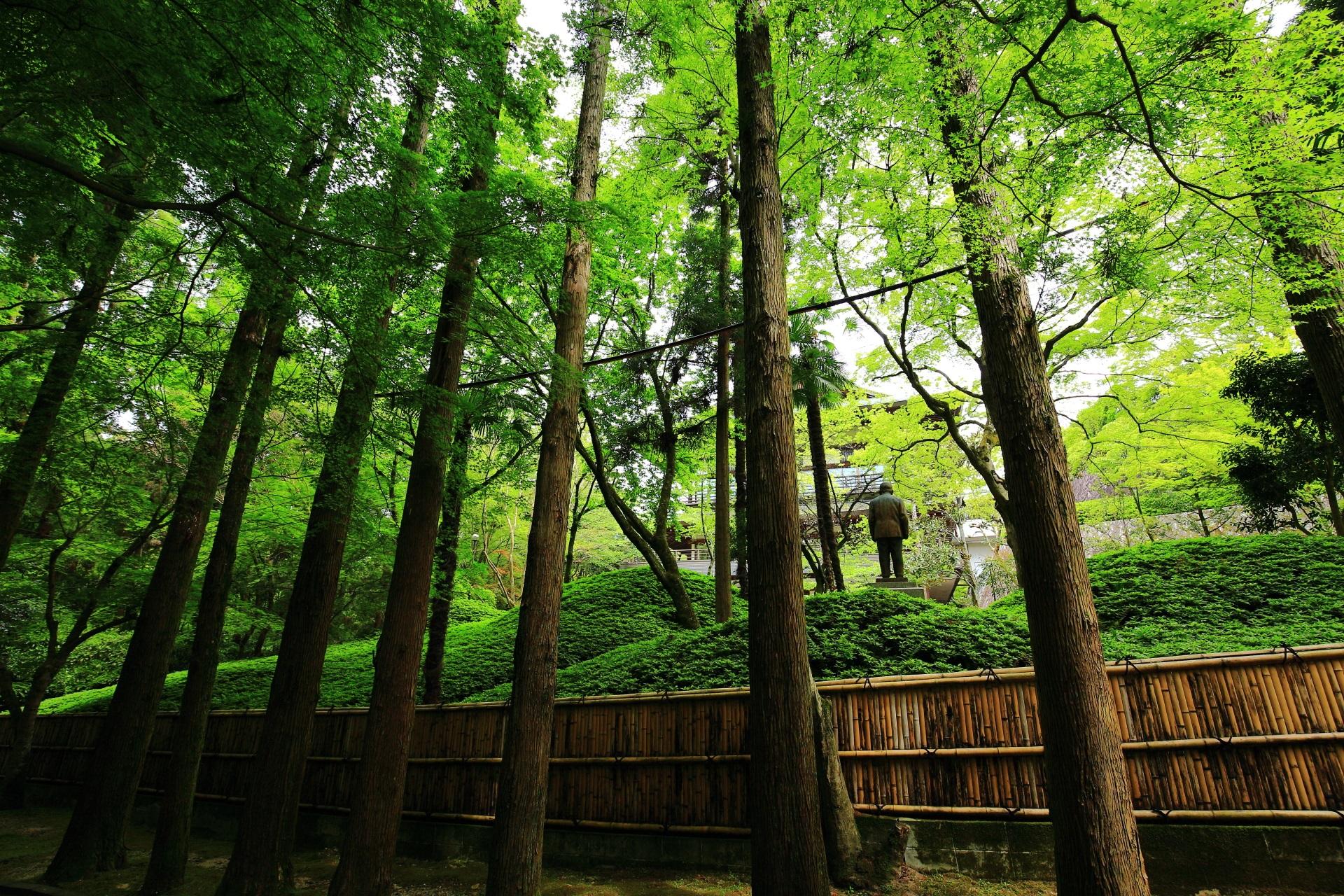 爽やかな新緑につつまれた今熊野観音寺