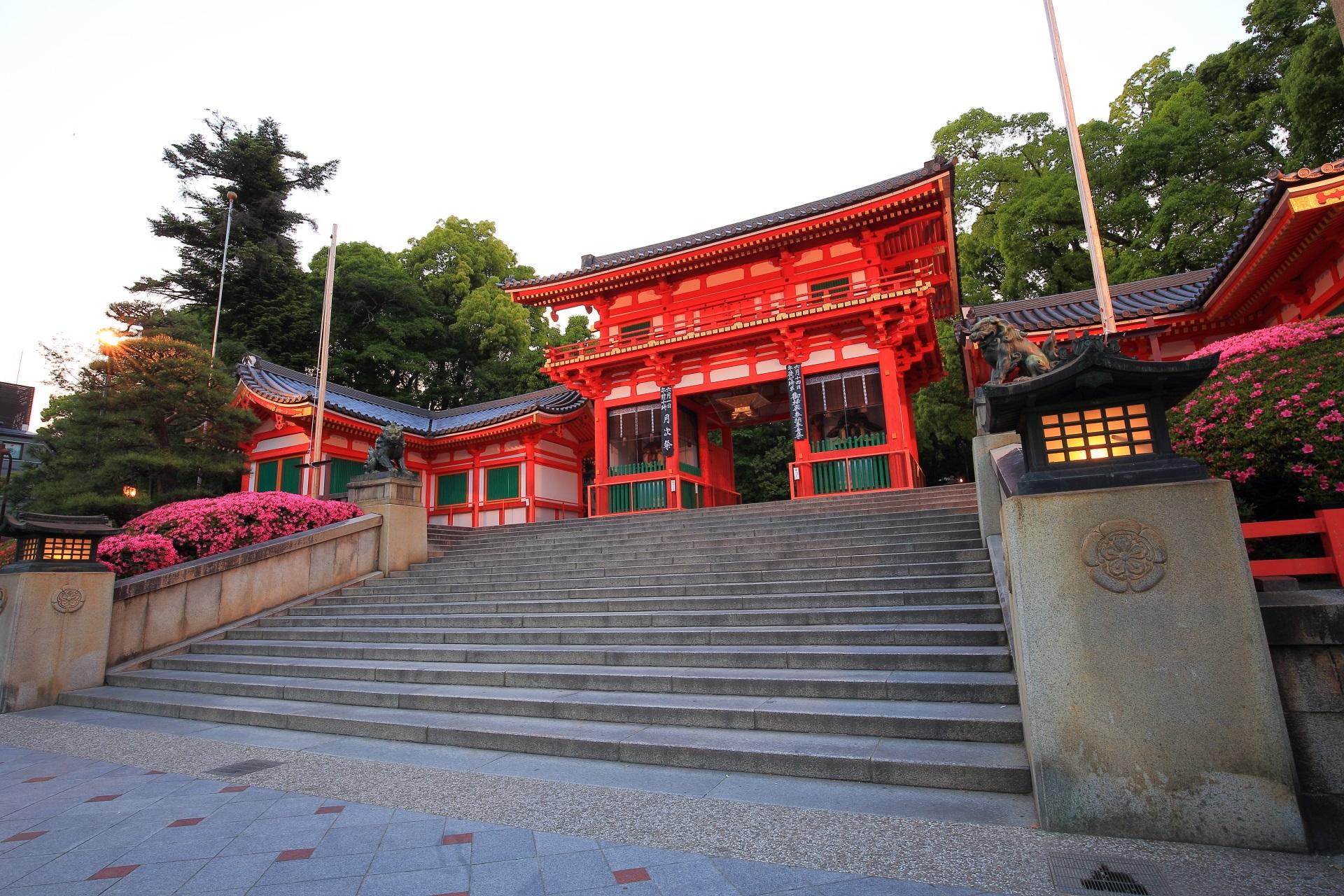 Kyoto Yasaka-jinja Shrine azalea
