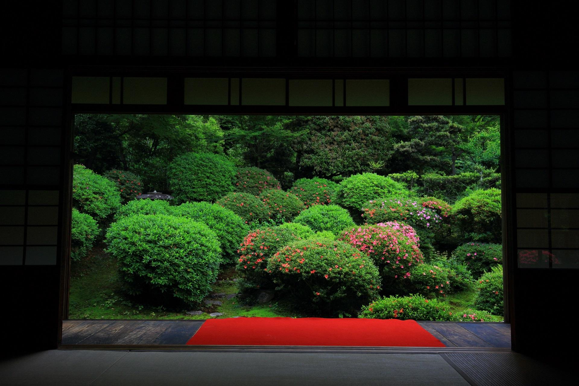 安楽寺の書院前庭のサツキ
