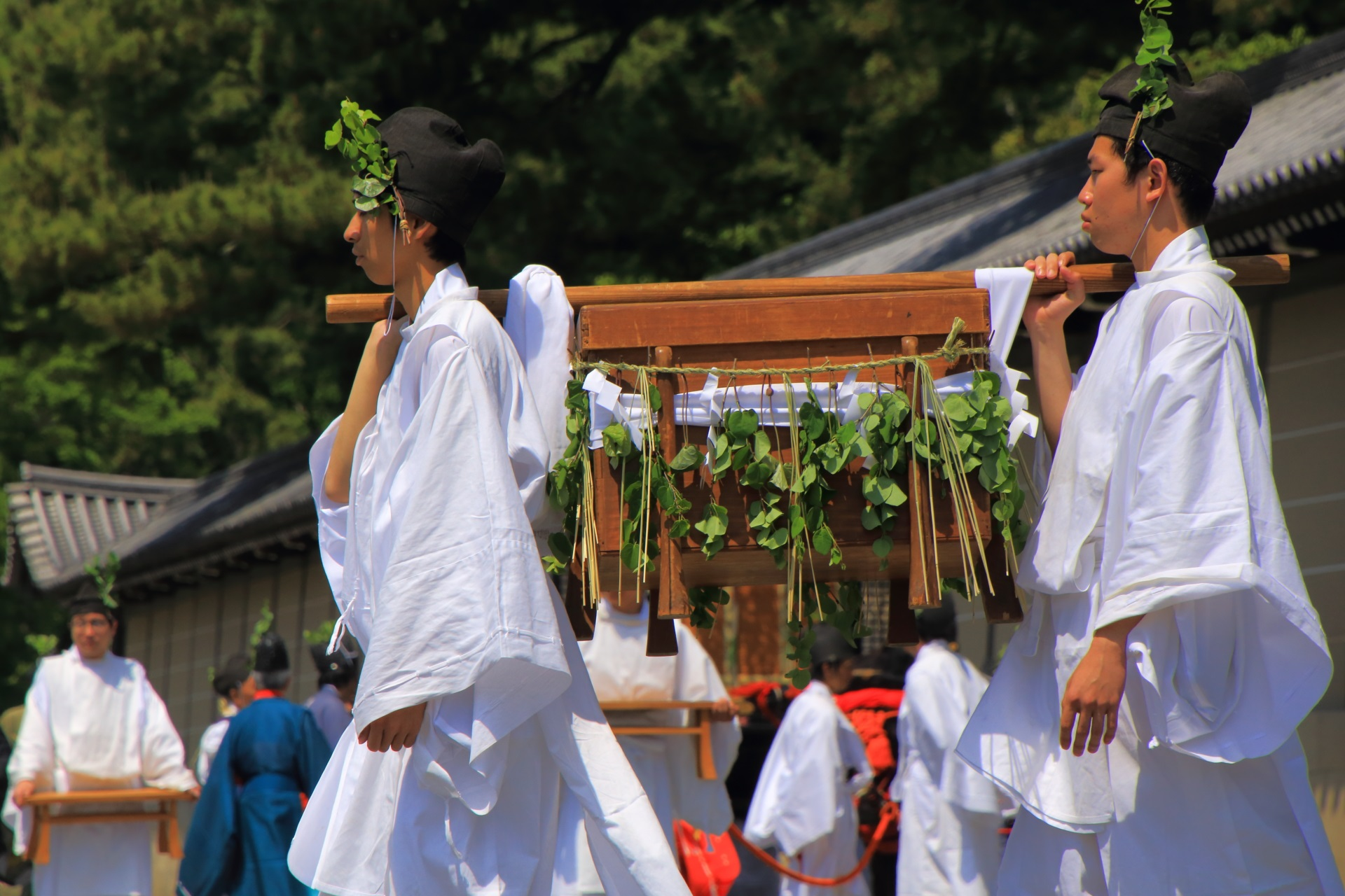 葵祭のふたばあおい