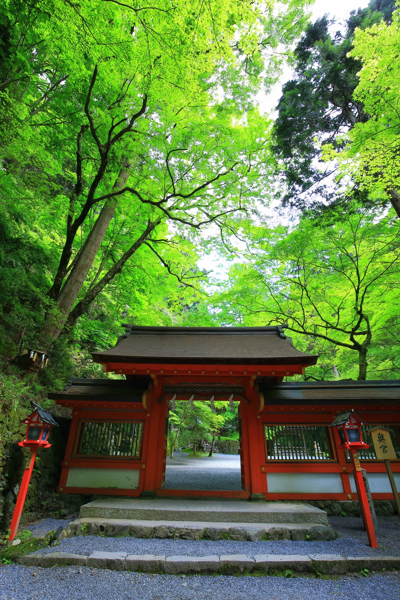 fresh green Kifune-jinja shrine in Kyoto,Japan
