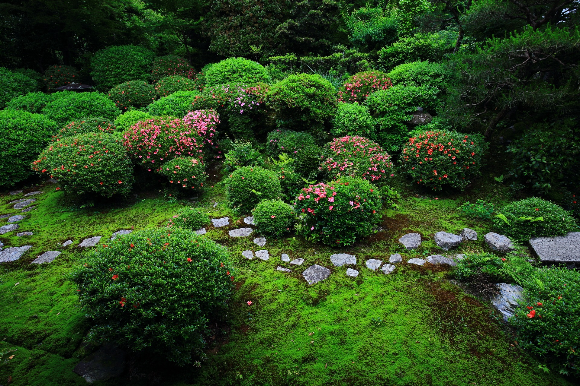 サツキと緑の綺麗な安楽寺の美しく趣きある庭園