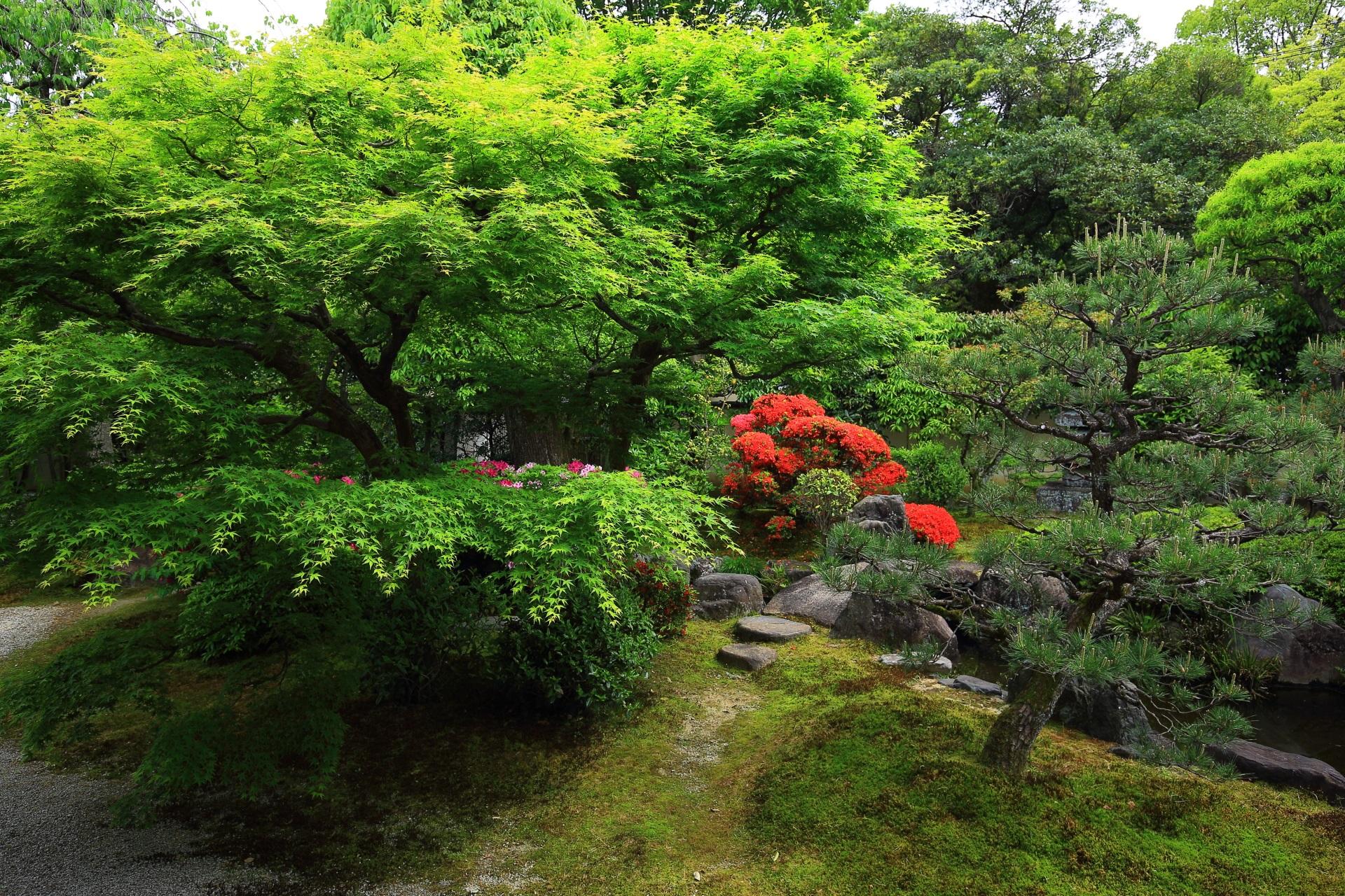 庭園の奥に見える鮮やかで真っ赤なキリシマツツジ