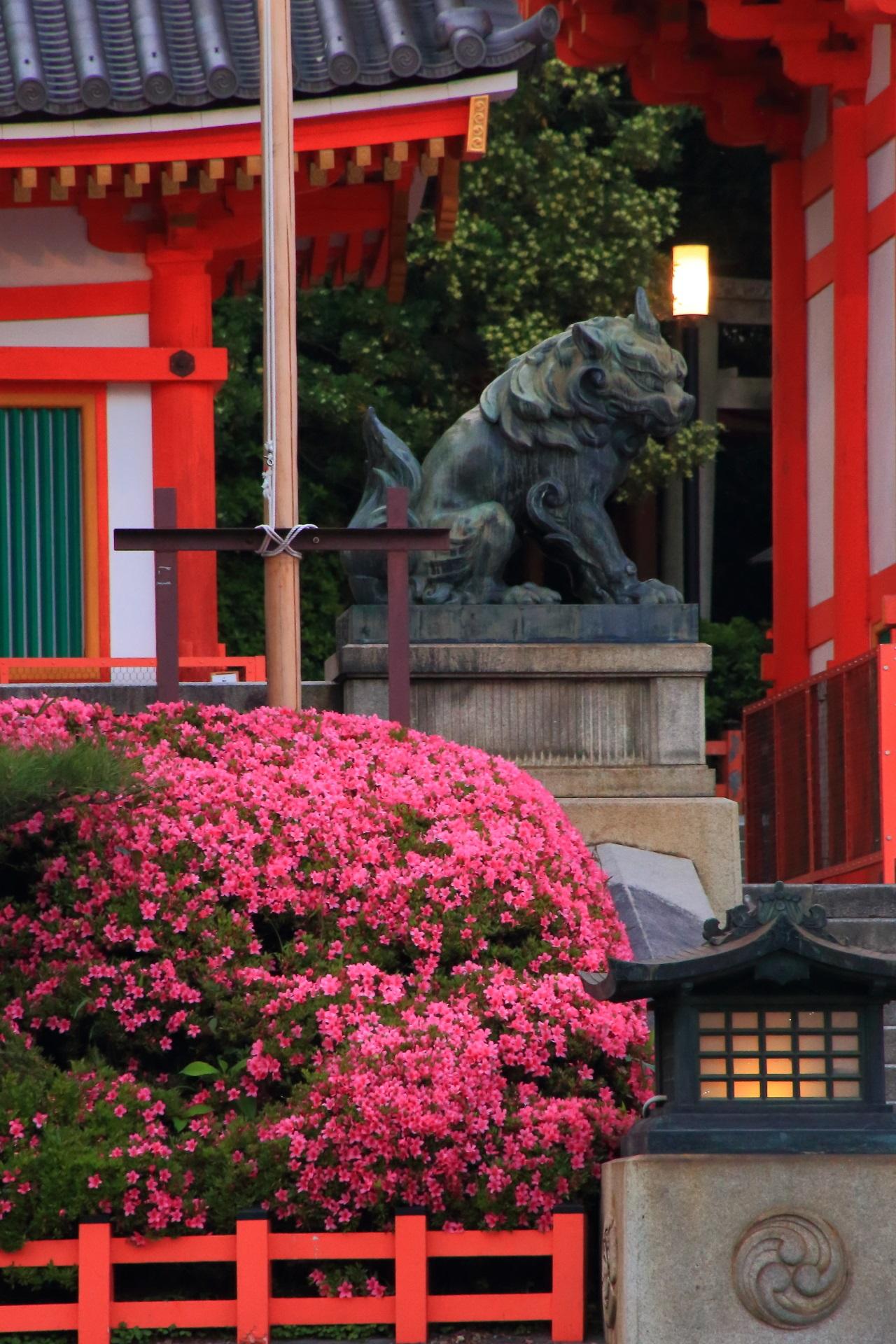 緩い灯りが照らす狛犬さんとサツキの花