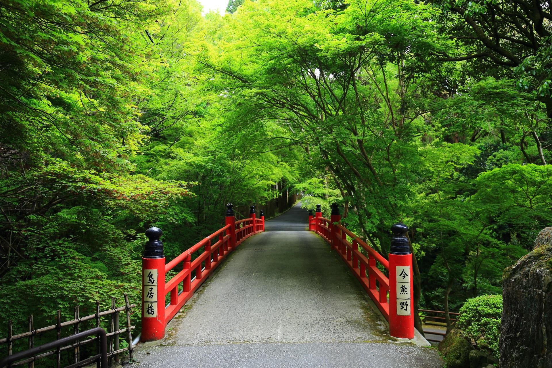 鮮やかな新緑につつまれた今熊野観音寺(いまくまのかんのんじ)