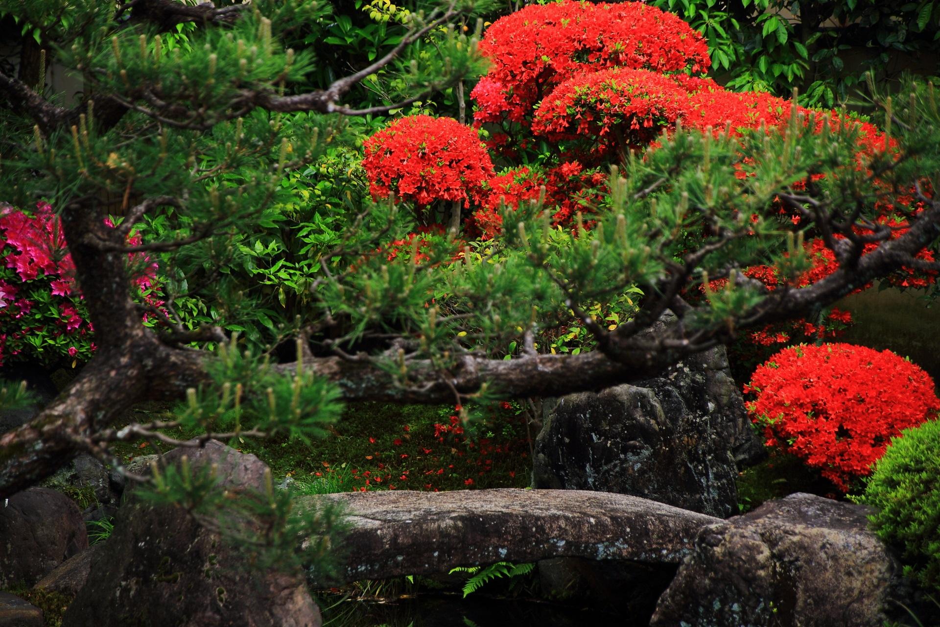 趣きある石や松が演出する真っ赤なツツジ