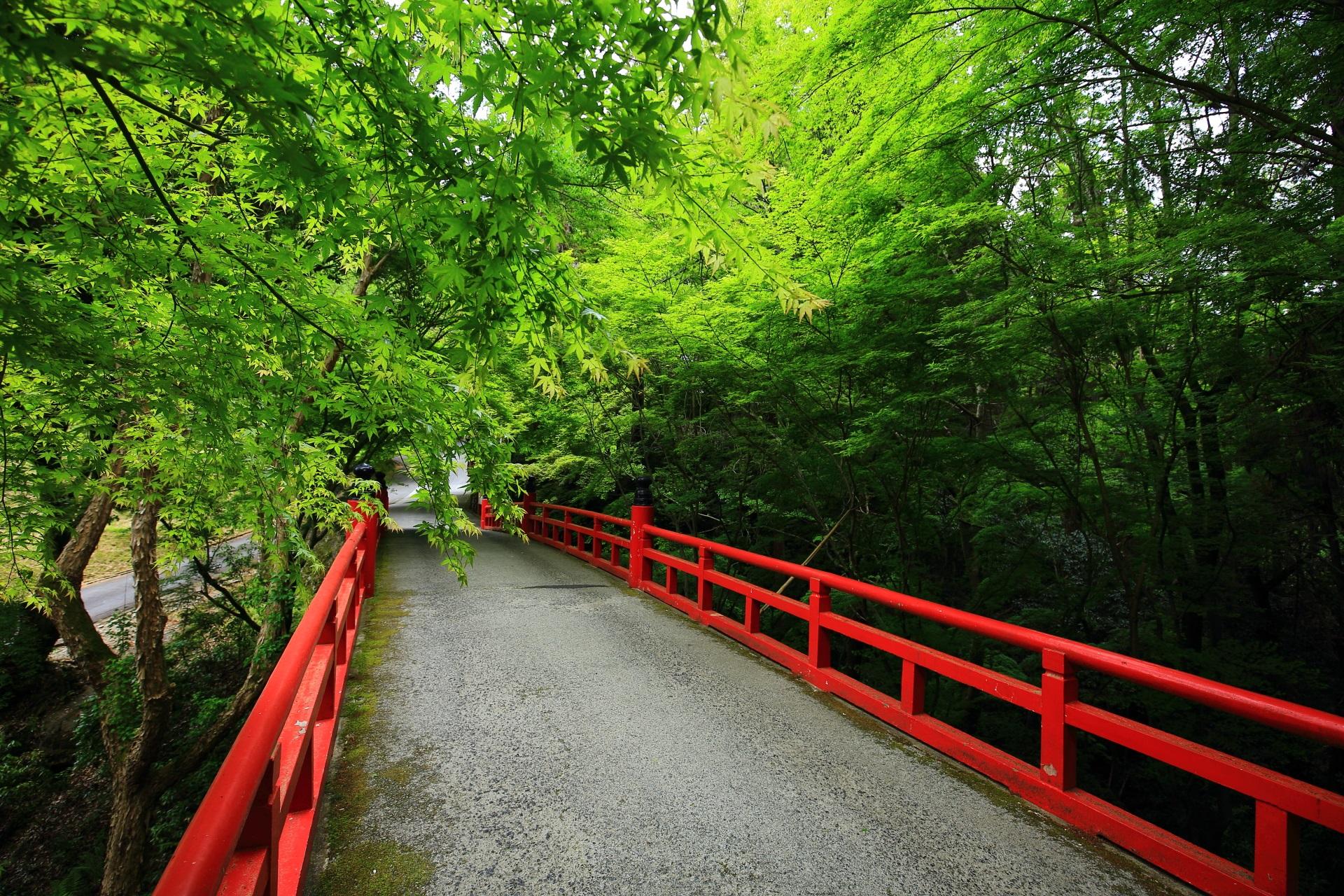 今熊野観音寺の鮮やかな新緑と鳥居橋