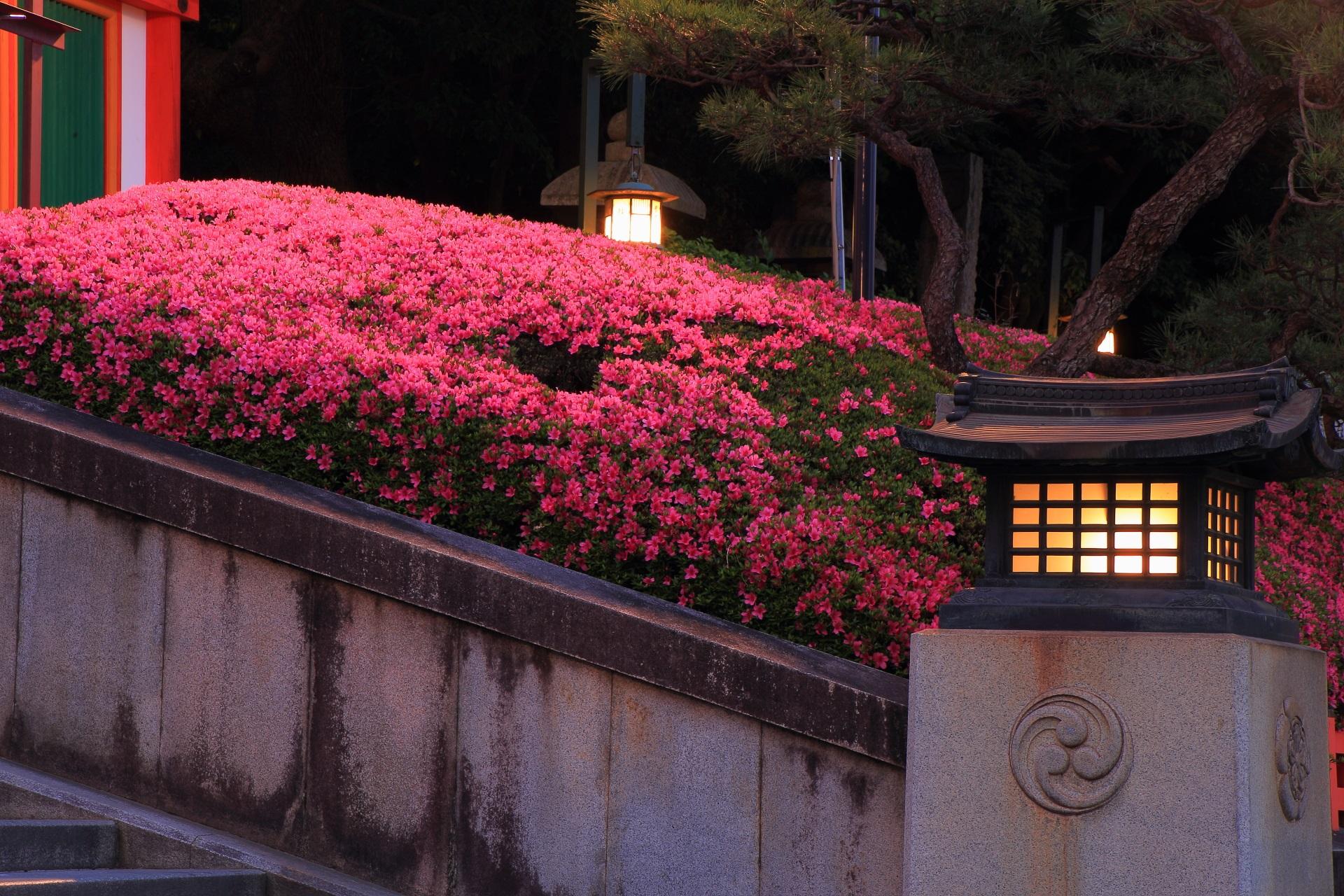 燈籠や街灯の緩い灯りが照らすサツキの幻想的な雰囲気