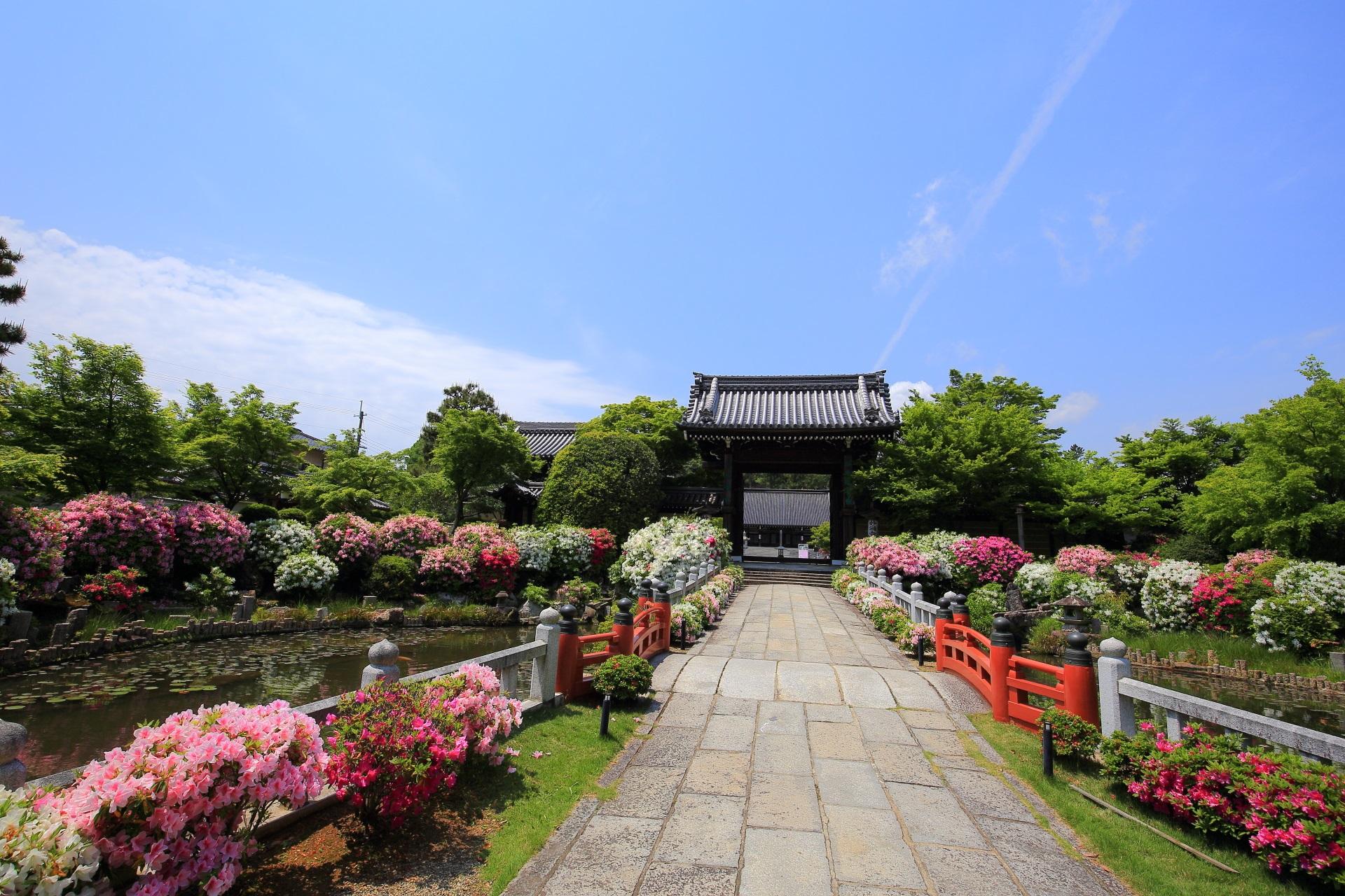 ピンクや白や紫などの多彩なツツジが咲く妙満寺(みょうまんじ)