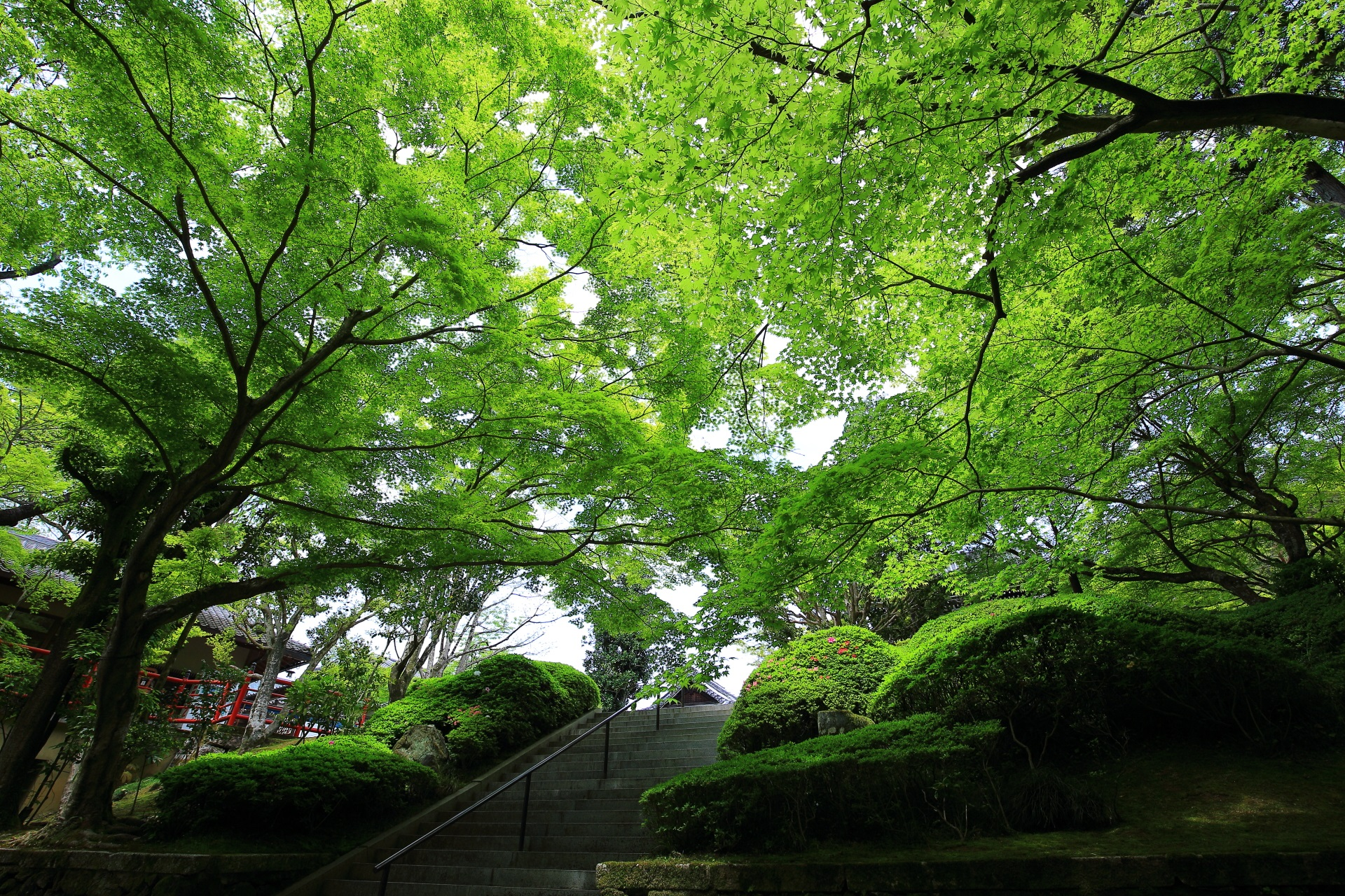 今熊野観音寺 新緑 高画質 写真