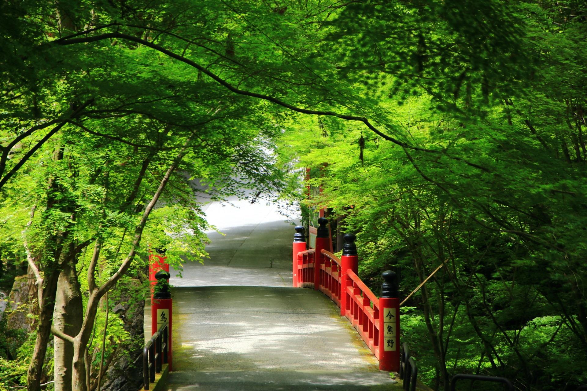 深い新緑につつまれた今熊野観音寺の赤い鳥居橋