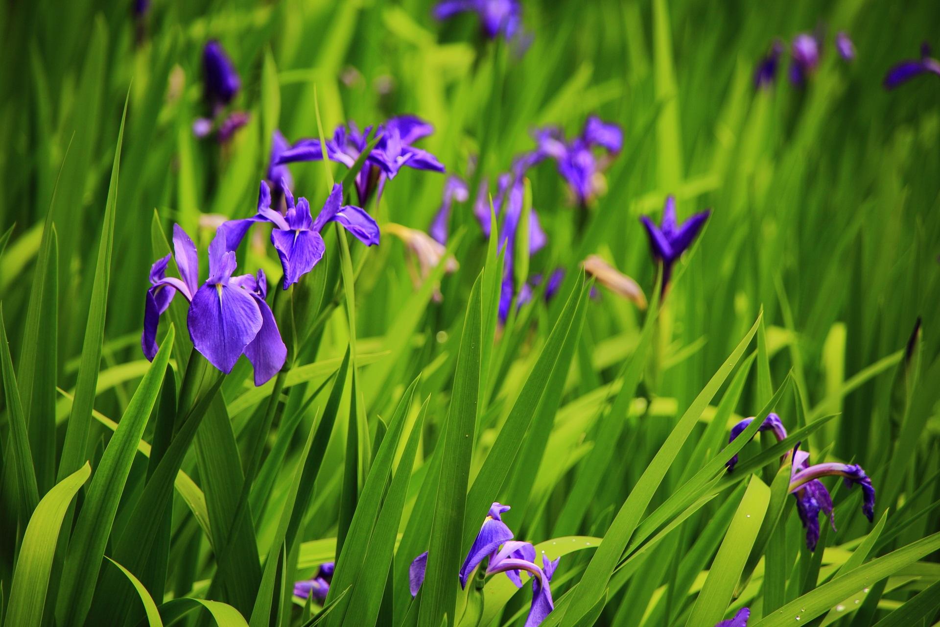 春の長閑な雰囲気が漂う大田神社(おおたじんじゃ)