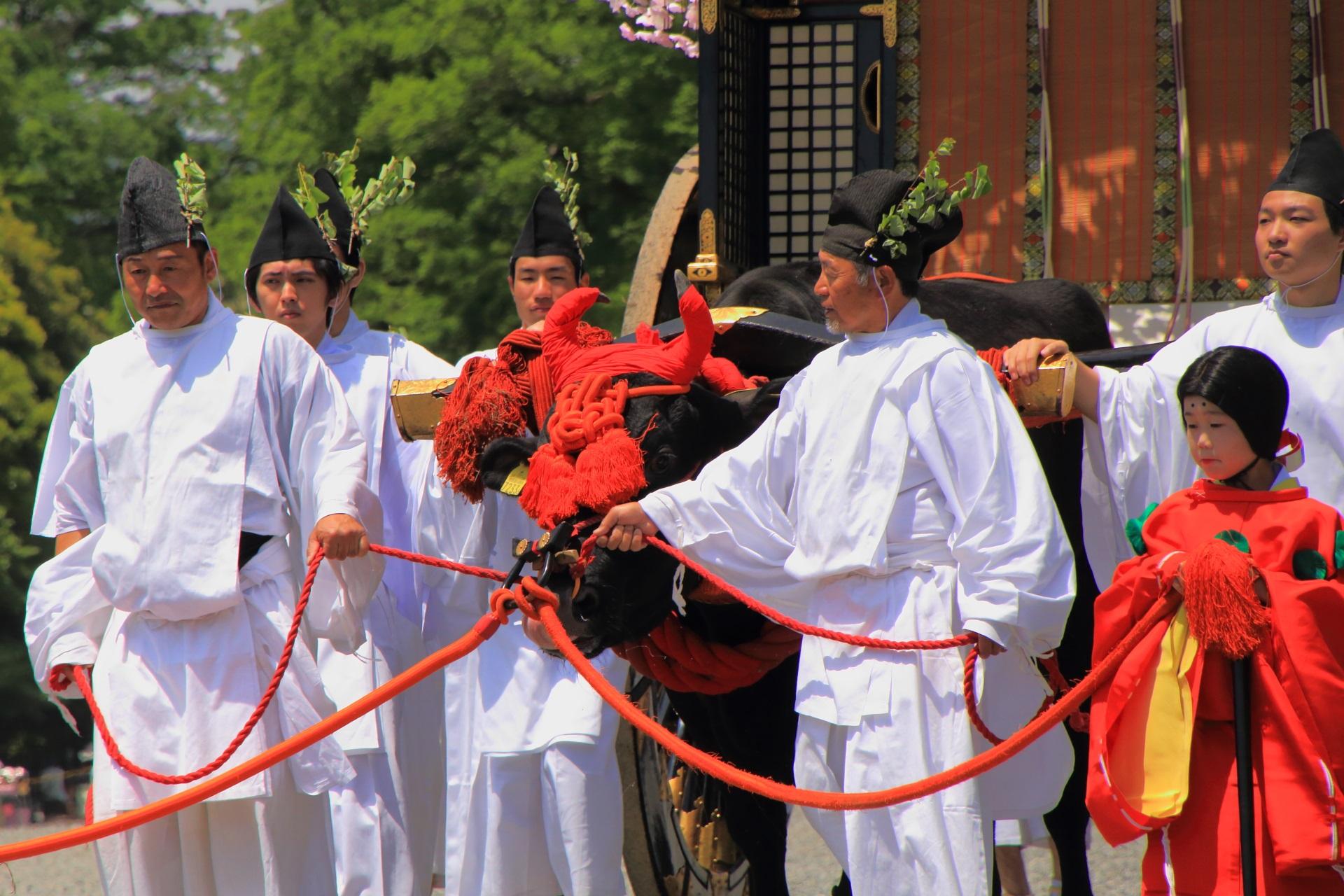 葵祭の力強い牛車