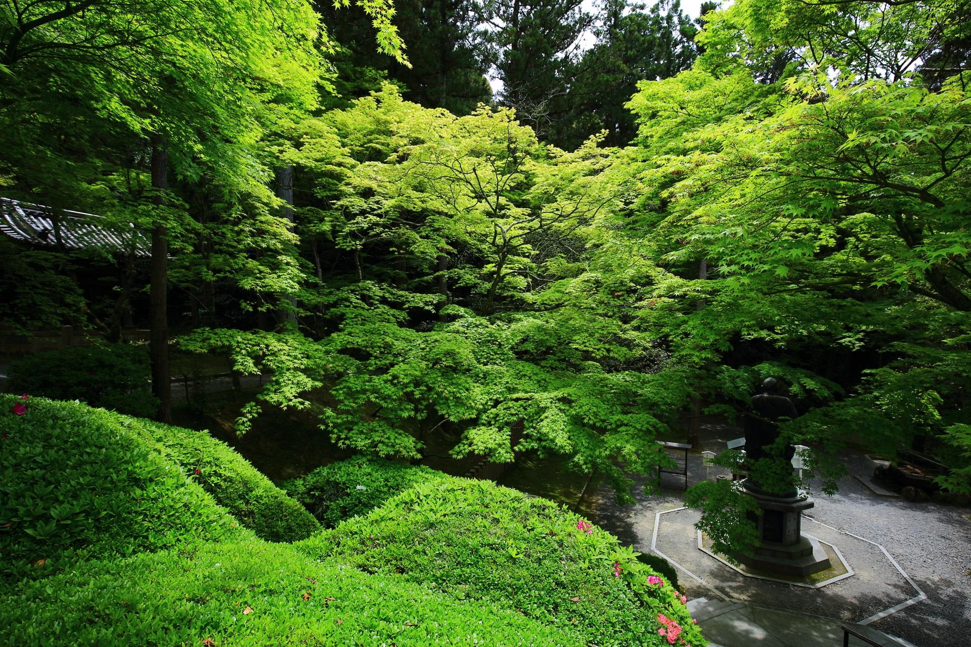 今熊野観音寺の鮮やかな新緑と深い緑