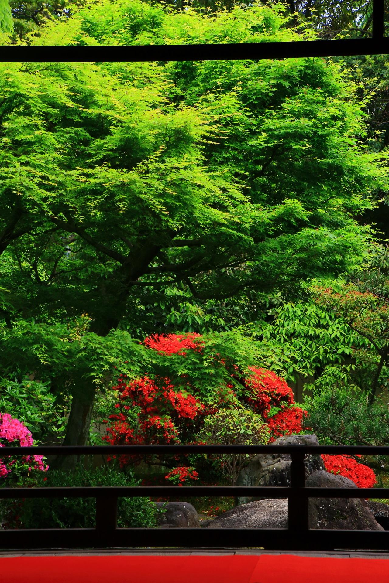 正伝永源院のの素晴らしいツツジや新緑と春の情景