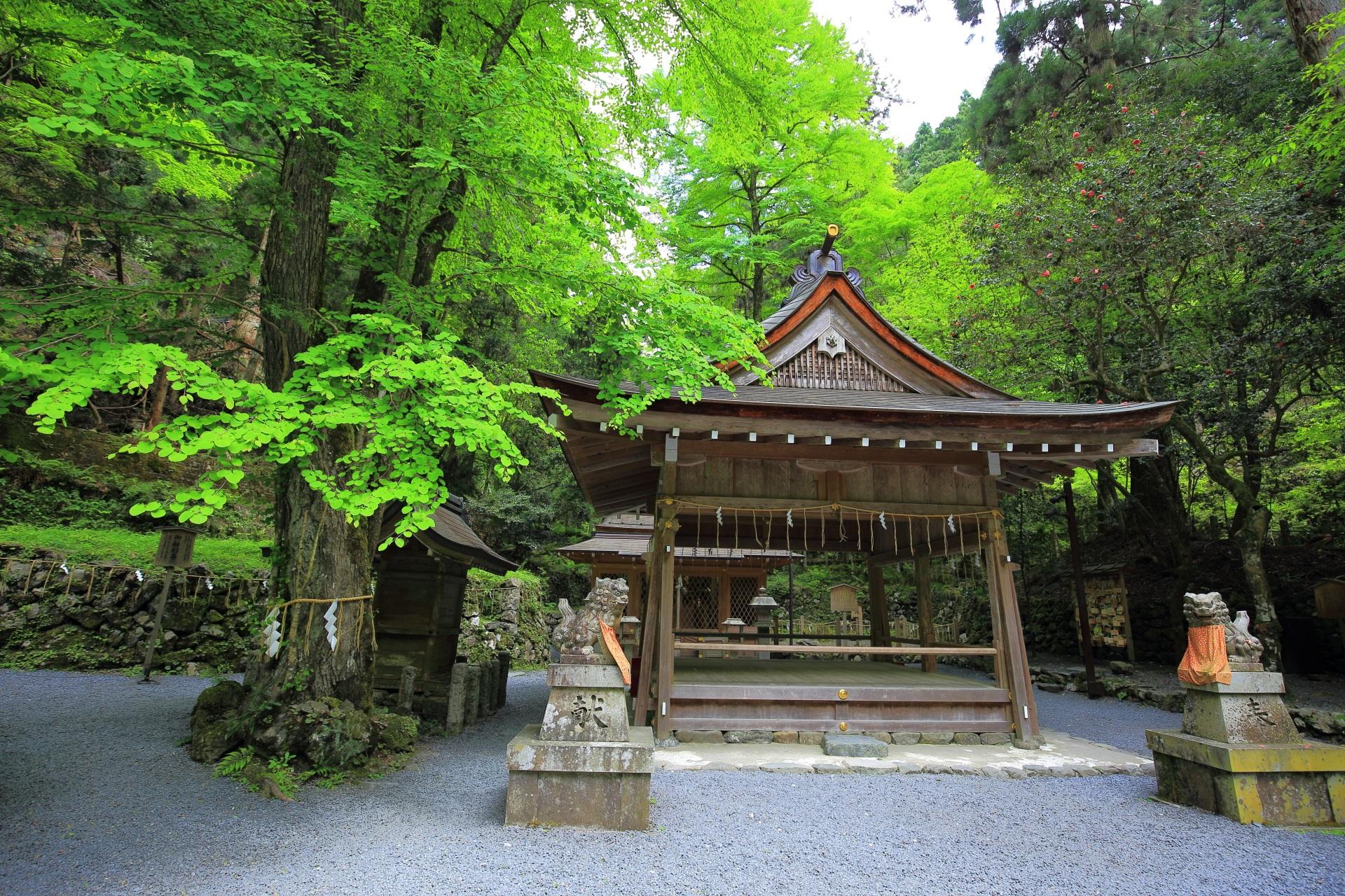 貴船神社の奥宮の拝殿と新緑