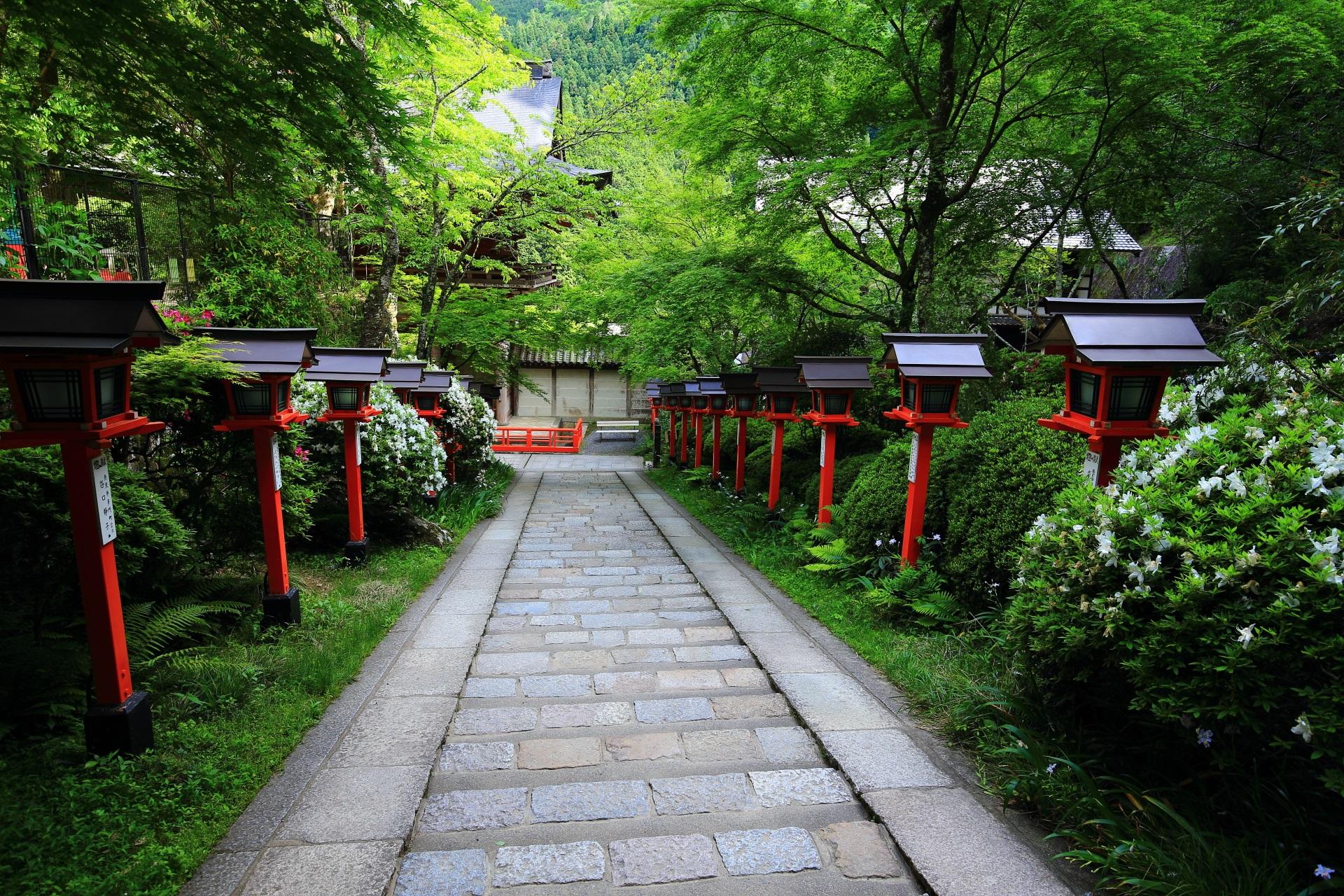 風情ある参道と美しい緑