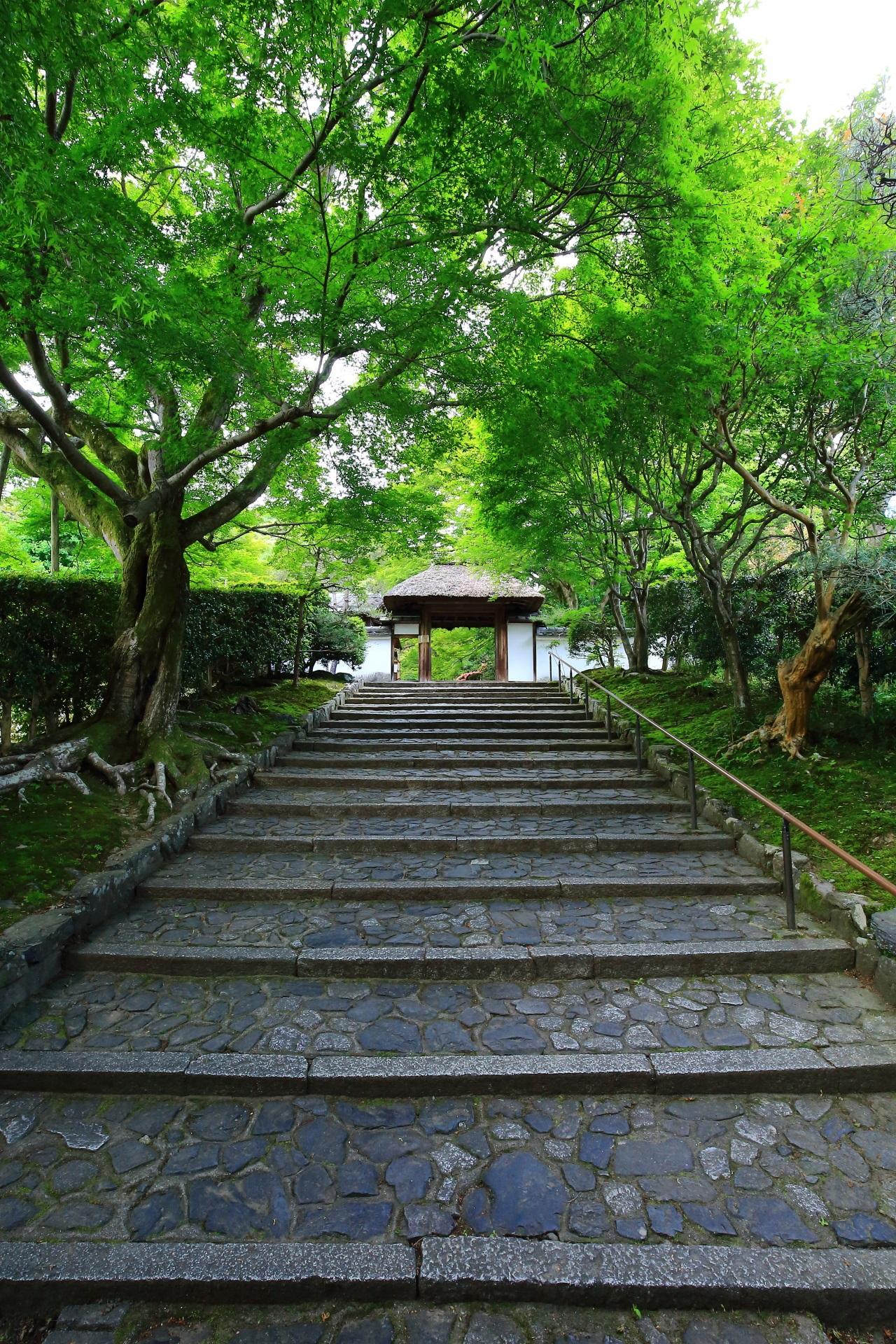 圧巻の緑と風情ある山門と石段